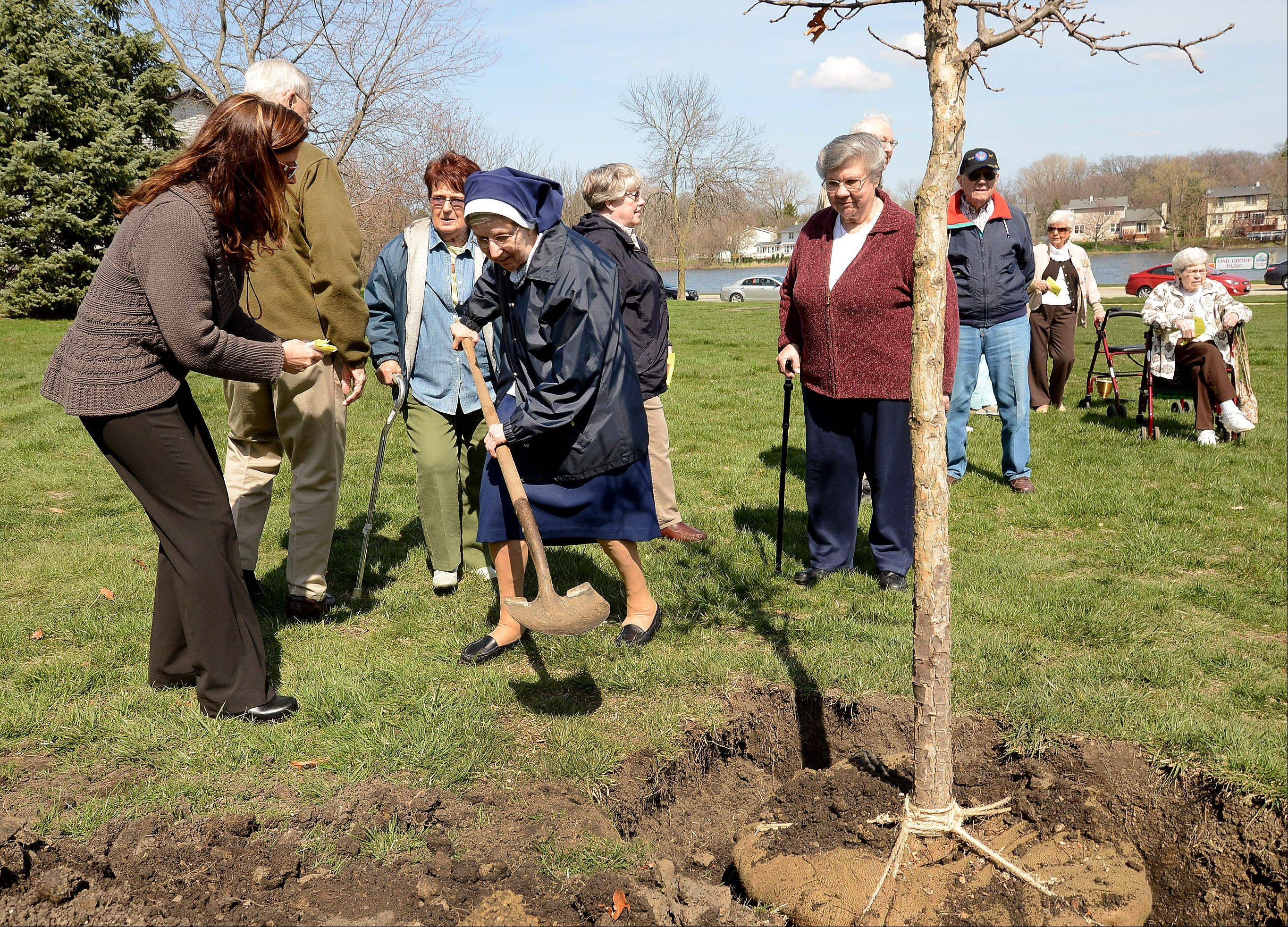 Sr. Augusta, a resident of Clare Oaks, gets help shoveling dirt from Beth Welch, Executive Director of Clare Oaks, as residents of Clare Oaks retirement community in Bartlett plant oak trees in Oak Grove Park in honor of Arbor Day.