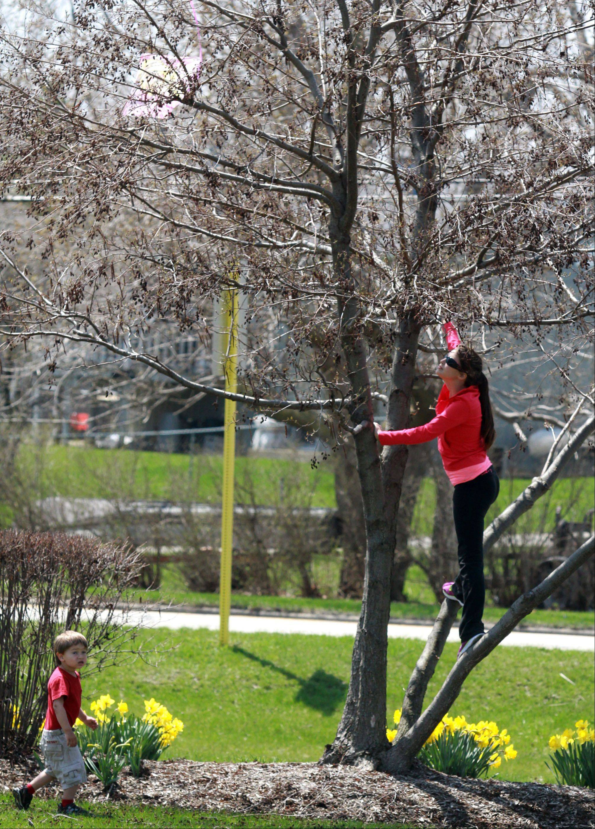 Nora Schneider, 16, of Crystal Lake, and Cole Benton, 2, of Lake Villa look for their kite in a tree at the 9th Annual Statewide Kite Fly at Slove Park in Lindenhurst on Saturday.