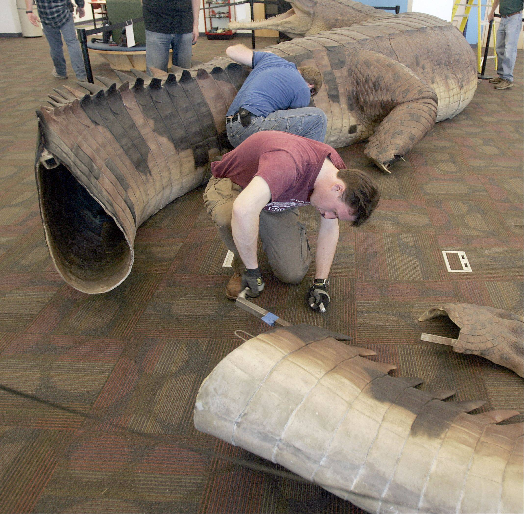 Joe Cottral of Project Exploration checks one of the fasteners Tuesday during the installation of the SuperCroc exhibit at the Gail Borden Public Library in Elgin. The exhibit, which has been all over the world, is being shown for the first time at a library with this summer's stop. The exhibit took two days to assemble. The prehistoric creature lived between 50 and 60 years. Its skull was upward of 6 feet long.