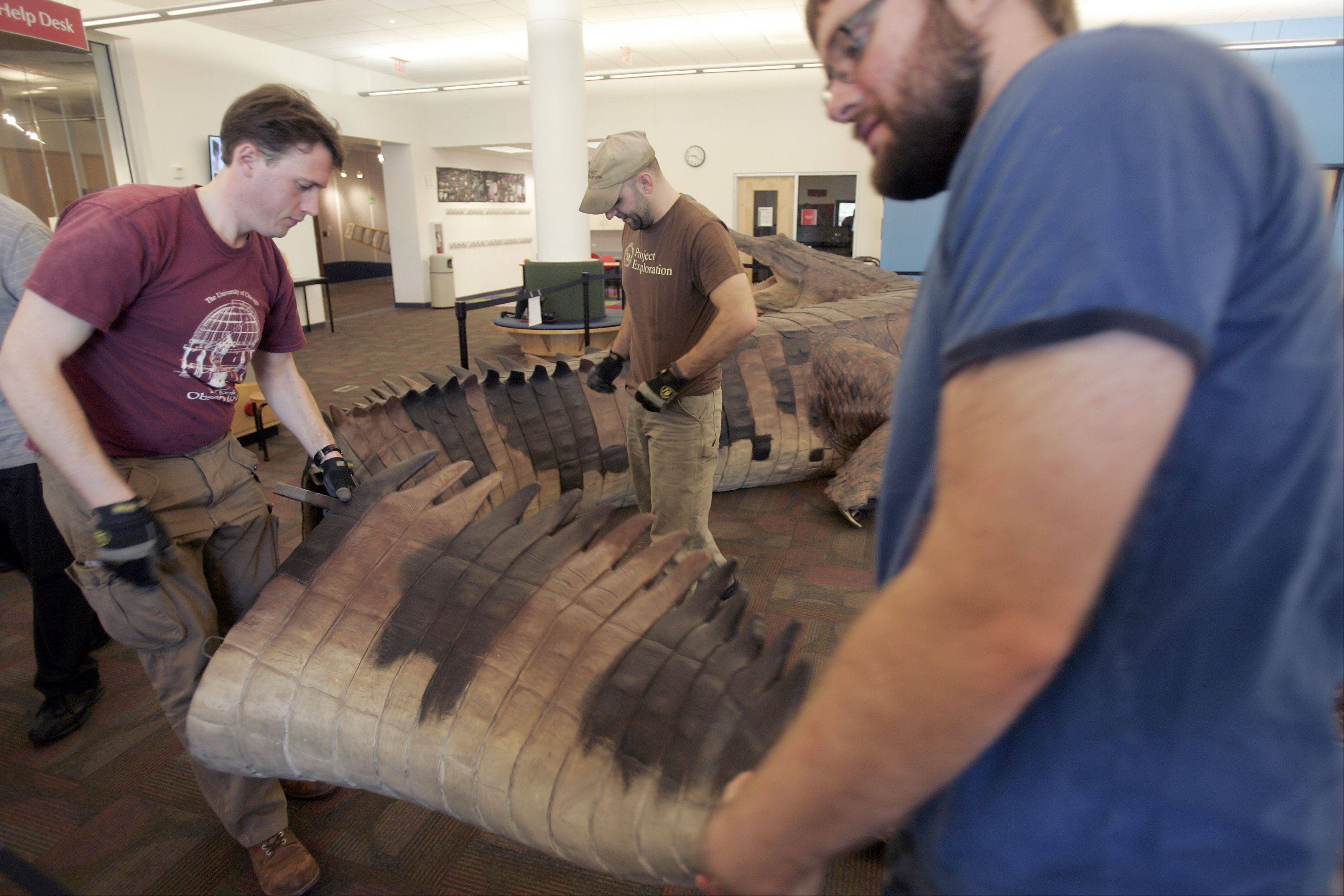 Joe Cottral of Project Exploration, left, and Jim Keith of Red Box help move part of the tail during the installation Tuesday of the SuperCroc exhibit at the Gail Borden Public Library.