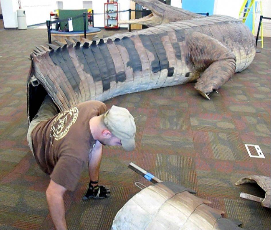 """Like a glove,"" remarked Carl Gustafson, director of operations with Project Exploration, as he crawled out of the tail of the SuperCroc during the installation of the exhibit Tuesday at the Gail Borden Public Library in downtown Elgin."