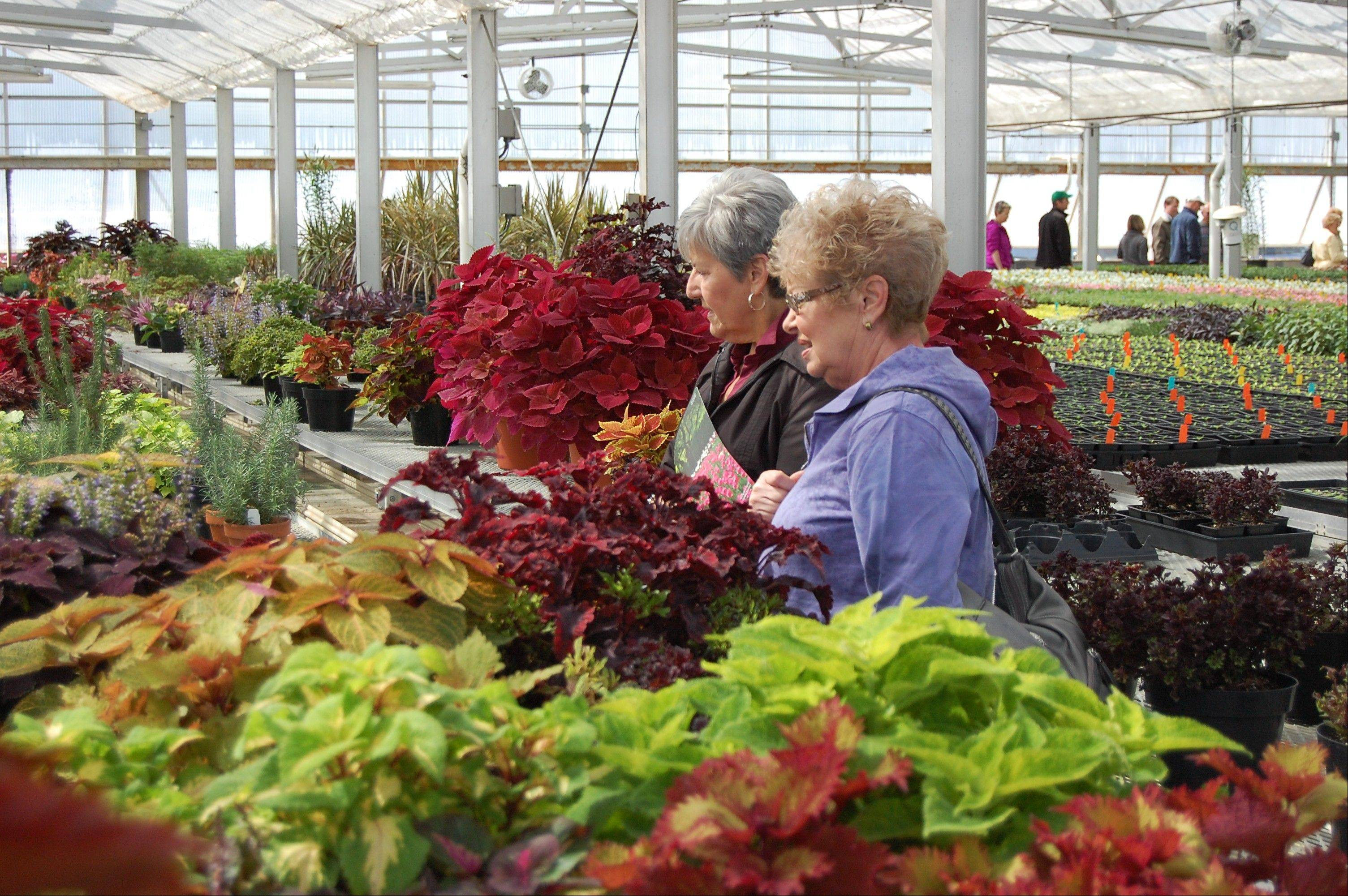 Tour the 18,000-square-foot greenhouse during the Cantigny Greenhouse Open House event at Cantigny Park in Wheaton on Sunday, May 5.