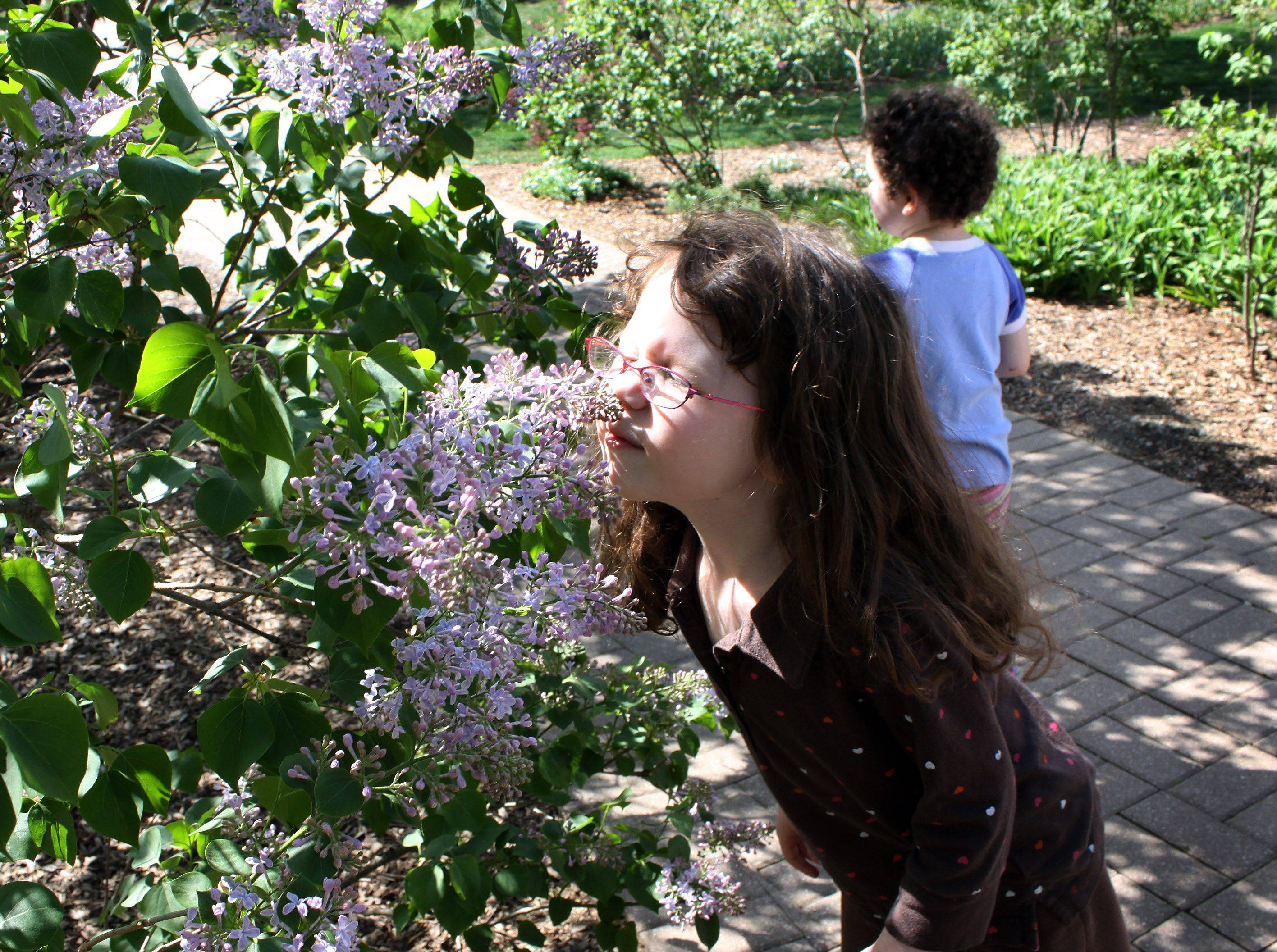 Catch a whiff of some sweetly scented lilacs during Lilac Time in Lombard, an annual spring festival running May 4-19 at Lilacia Park, 150 S. Park Ave.