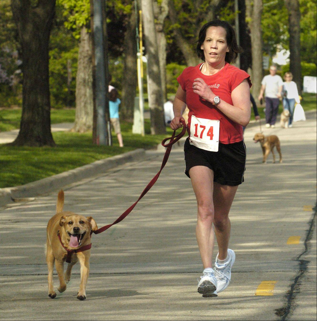 The eighth annual Lilac Time Mutt Strut 5K and 1-mile Puppy Path will step off at 8 a.m. Saturday, May 18, to be followed by a pancake breakfast in Lilacia Park.