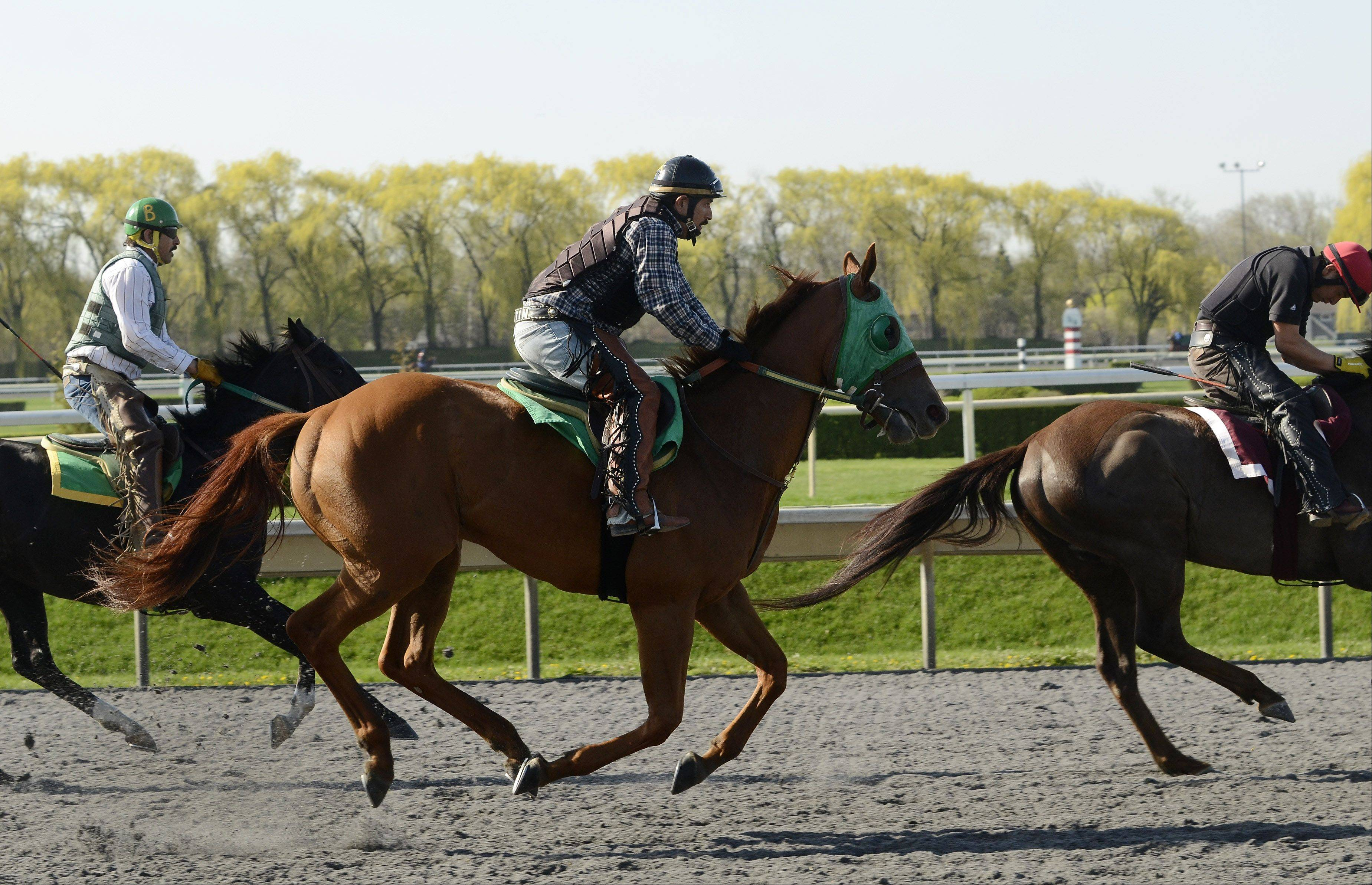 Horses take to the track in preparation for Arlington International's new season. The track will offer live racing four days a week through September.