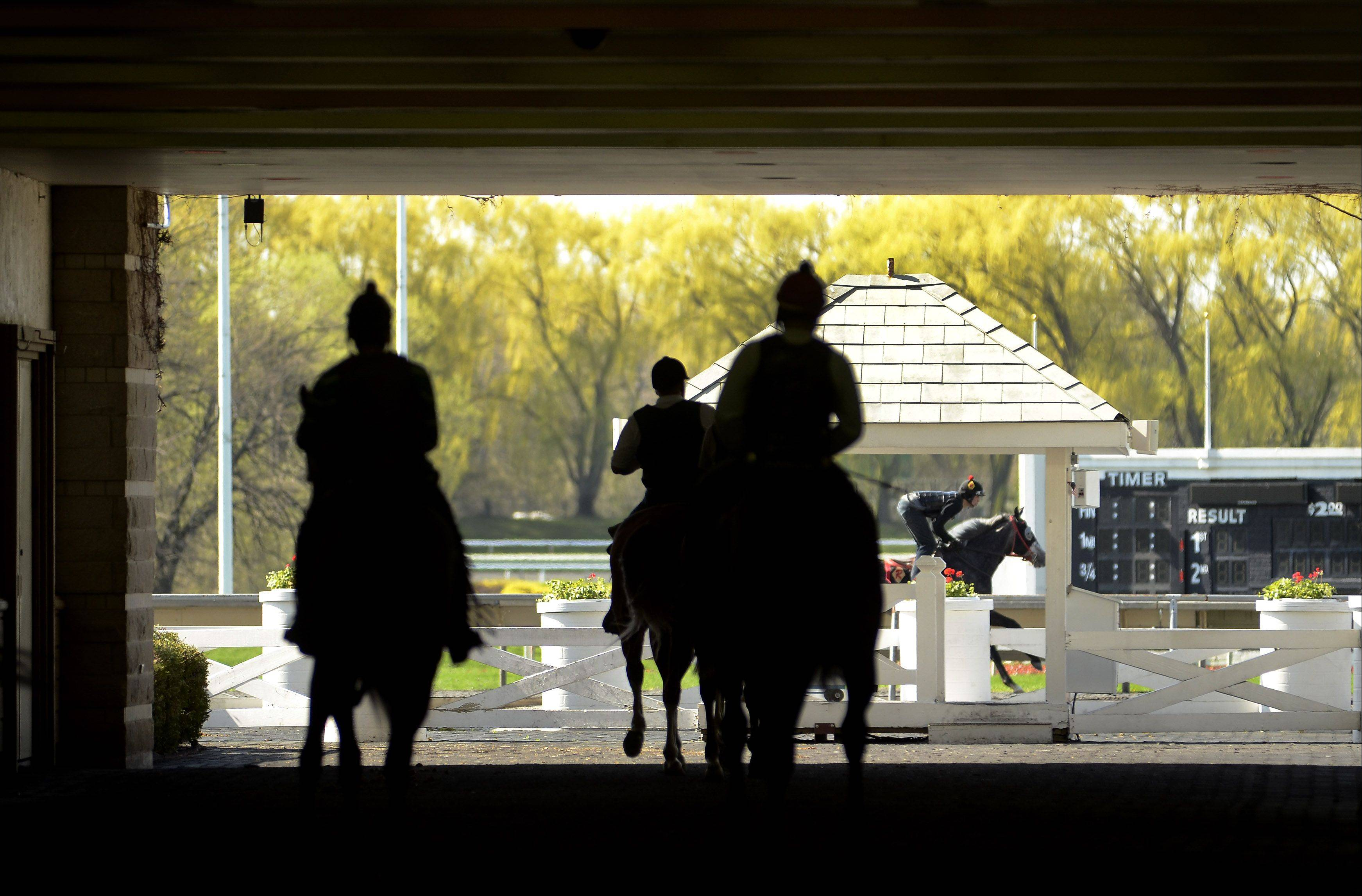 Horses take to the track in preparation for opening day at Arlington International Racecourse.