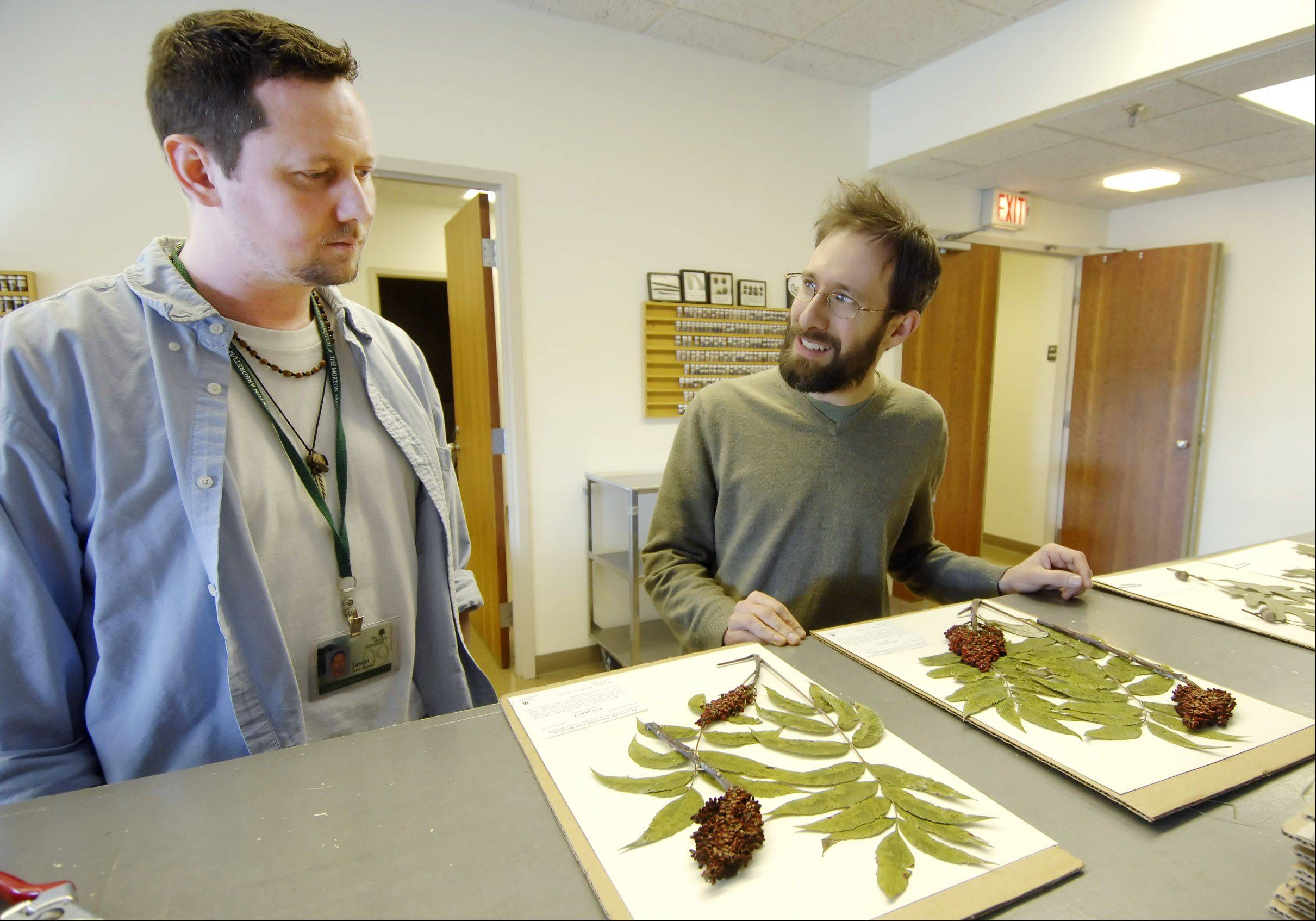 Fulbright Scholar Andrew Hipp, right, talks about placement of dried plants on archival paper with assistant Jason Sturner in this file photo from 2009.