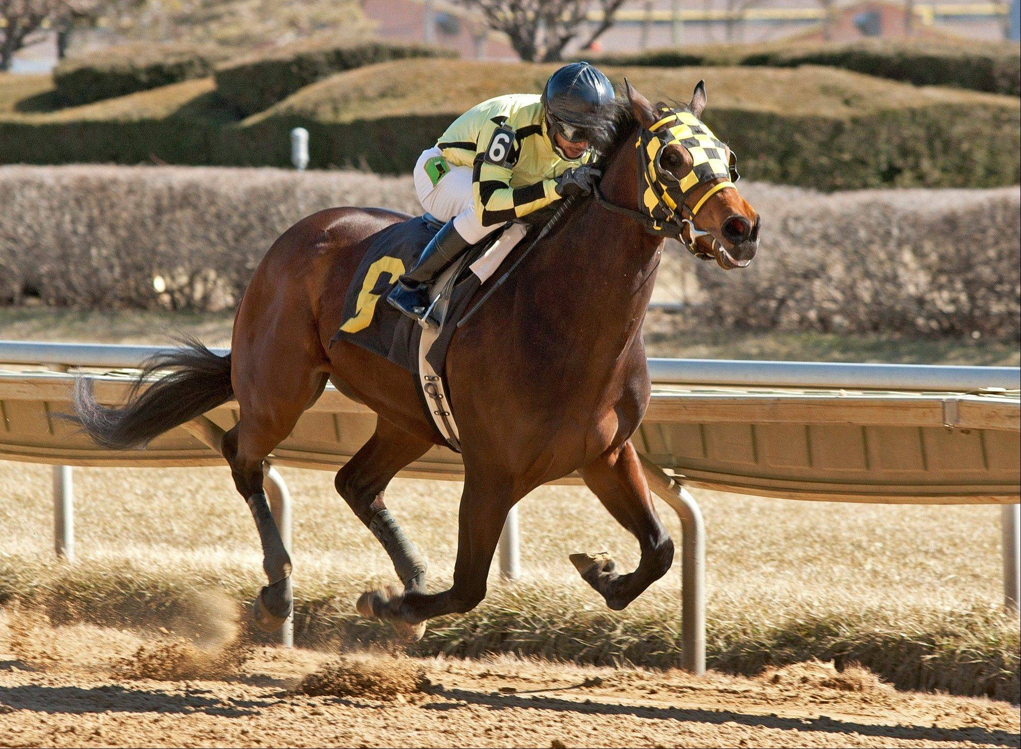 "Magna Fortuna, with jockey Julio Felix up, rides to a 9 3/4-length win during a horse race at Hawthorne Park in Cicero. The 3-year-old gelding whose name means ""great luck"" was the longest of long shots when he won a recent race. His mother, Lulu, was purchased for $300 at a slaughter auction by Gail Vacca, founder and president of the Illinois Equine Rescue Center. Vacca found out later that Lulu was pregnant when purchased."