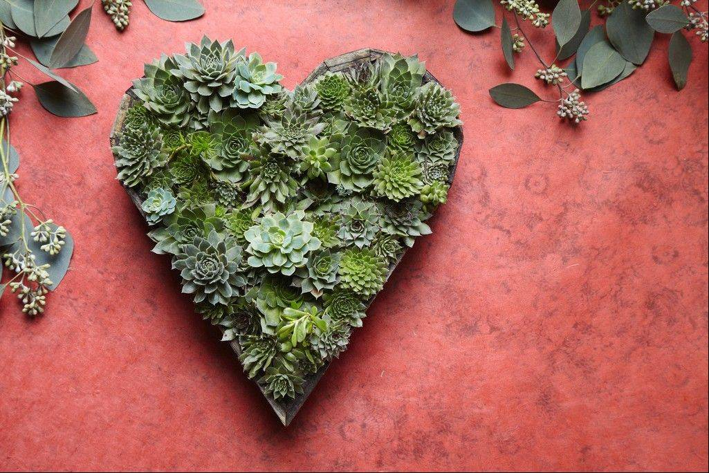 Cuttings of succulents arranged in a heart-shaped living picture in San Francisco. Living pictures are an easy, modern way to add color and texture to an outdoor space.