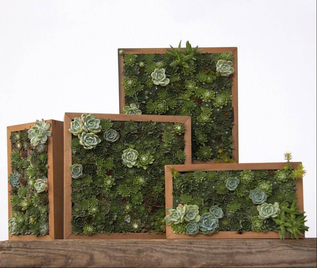 Various horizontal and vertical living pictures made with succulent cuttings in San Francisco.