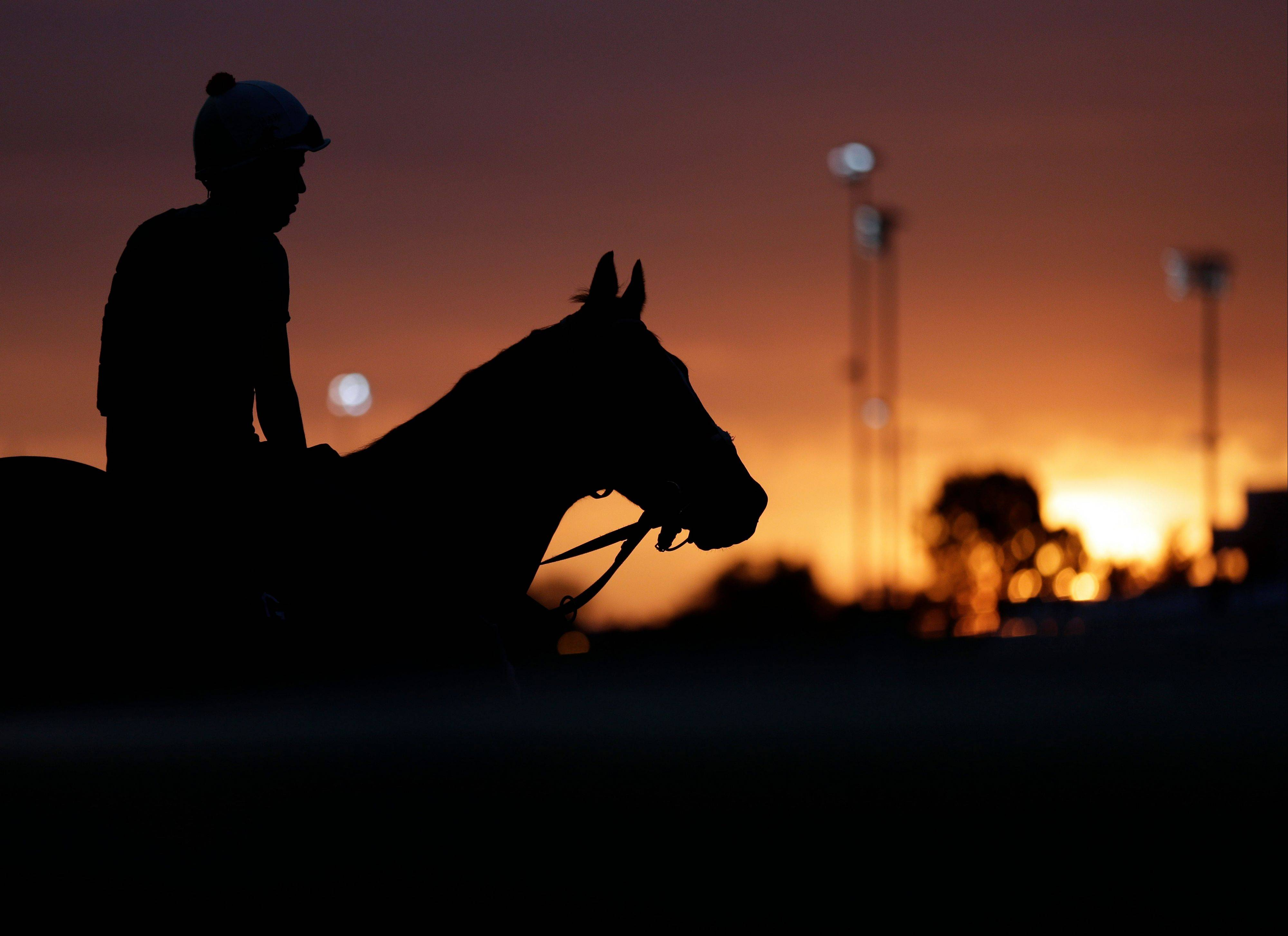 A horse waits to take his morning workout at Churchill Downs Friday, May 3, 2013, in Louisville, Ky. Saturday will be the 139th running of the Kentucky Derby.