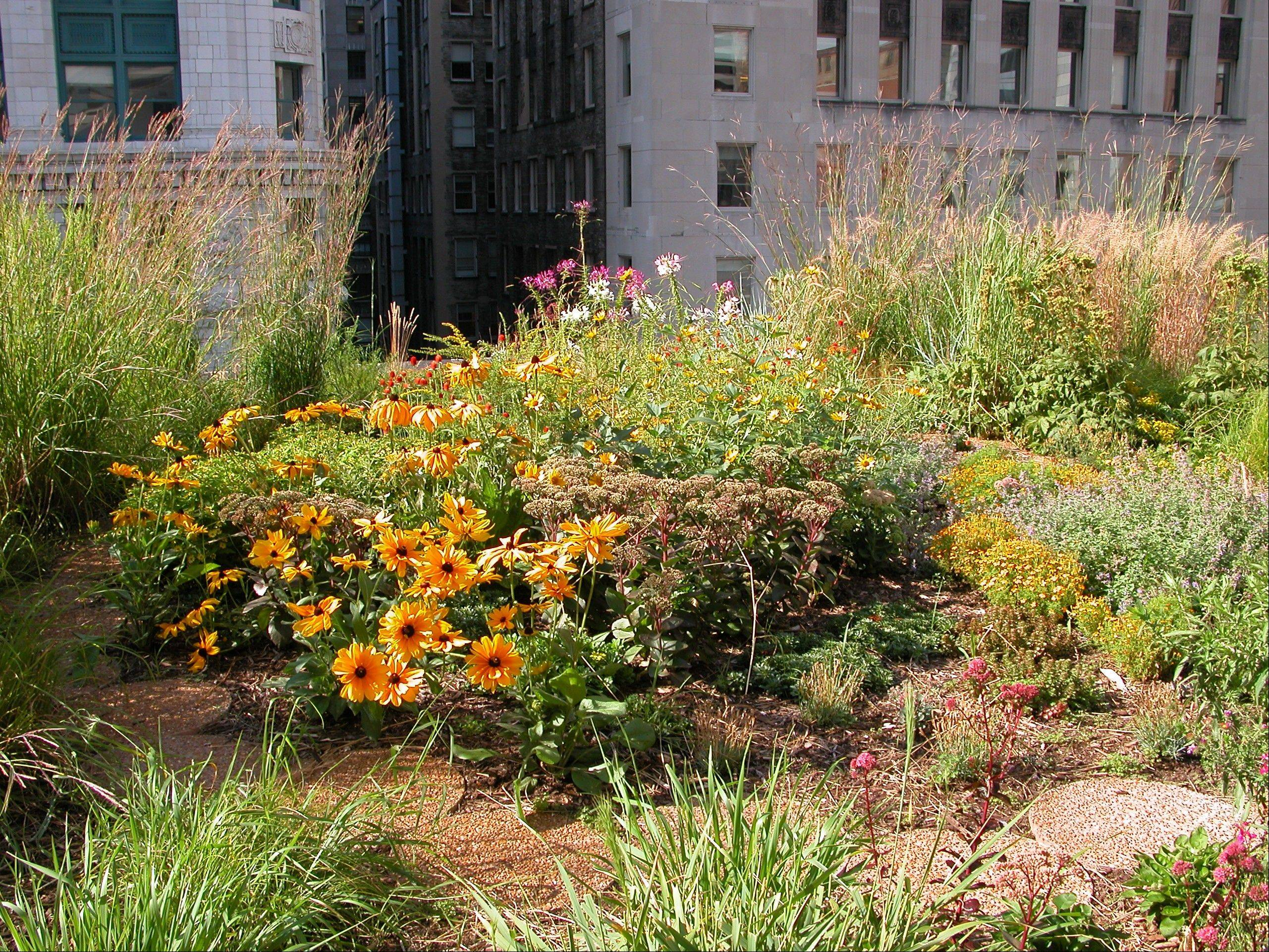 Landscaping on rooftops, such as the Chicago City Hall roof here, is one way to create a �greener� environment.