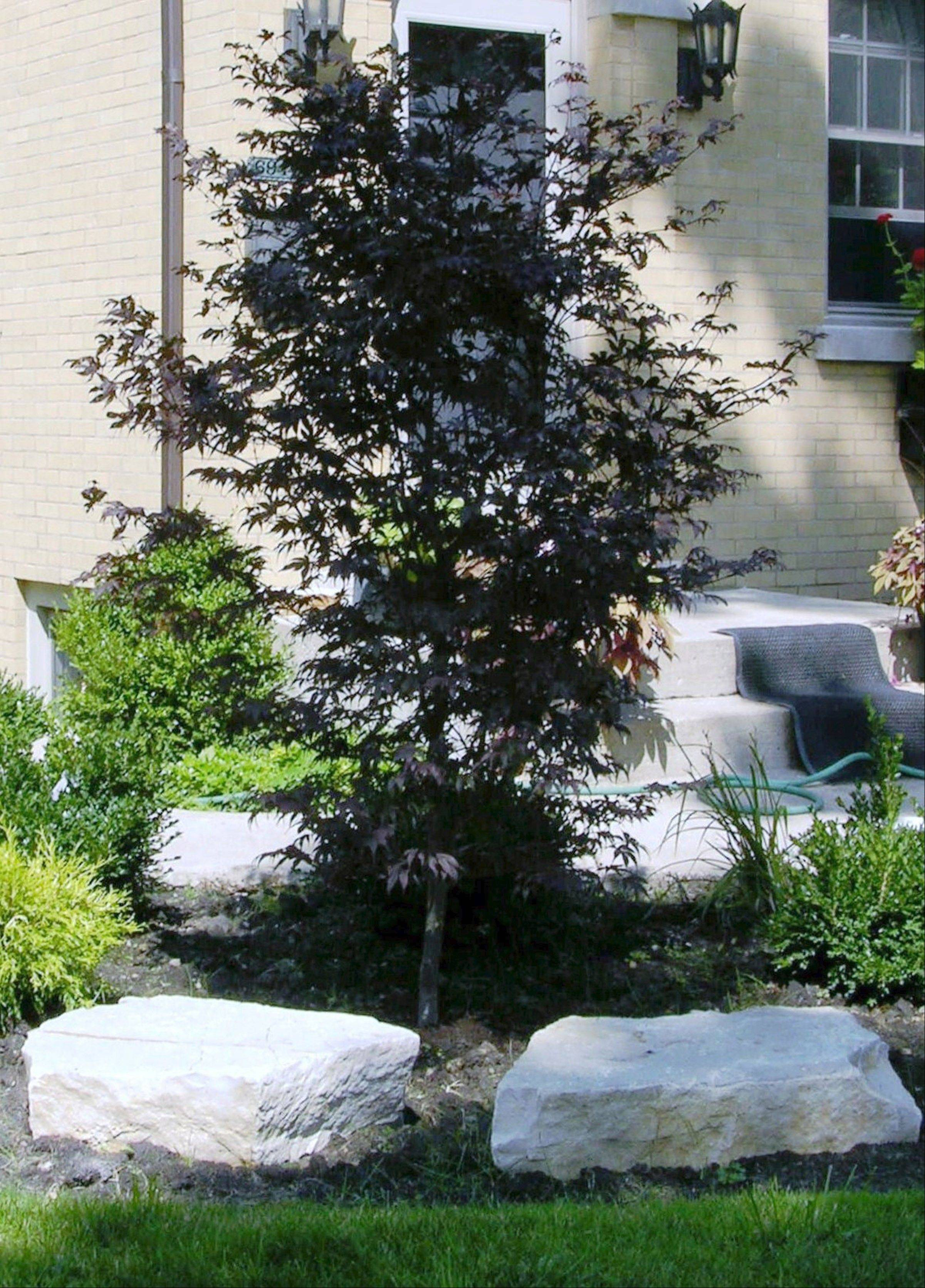 An outcropping of stones near an ornamental tree can add dimension to an outdoor design as well as help to anchor the house.