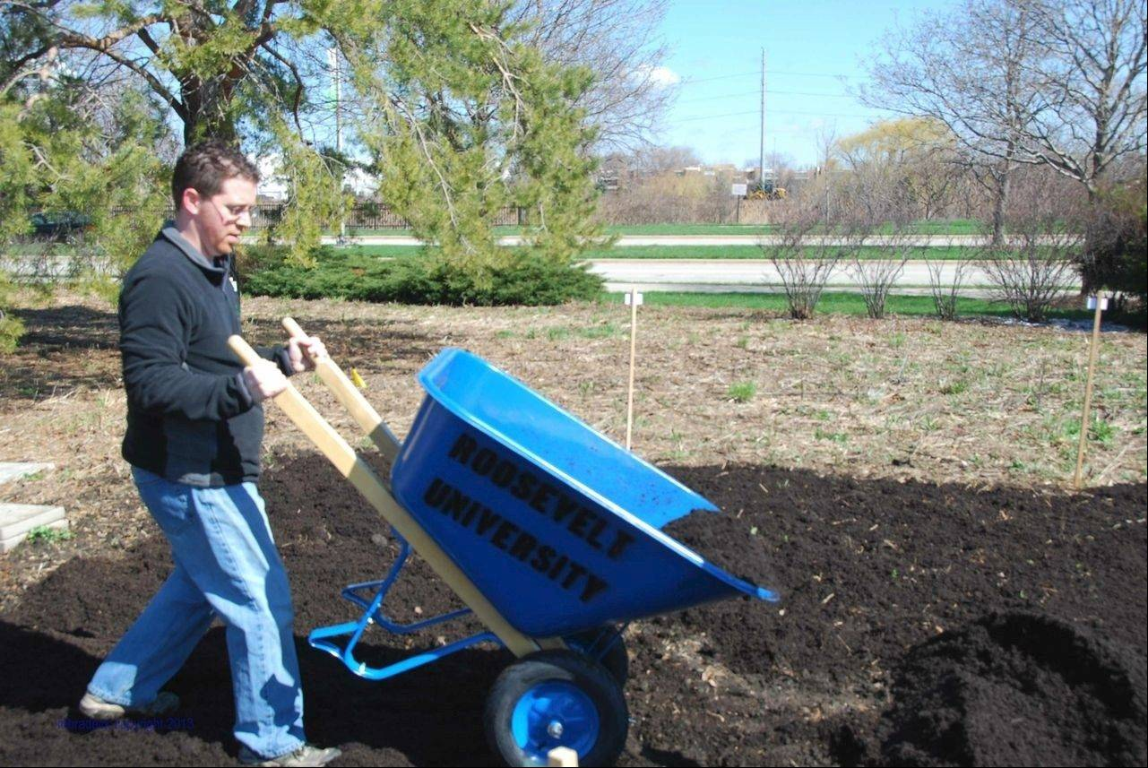 Shaun Keating, an administrator in Roosevelt University's College of Pharmacy, gets off to a good start at this year's community garden in Schaumburg where he hopes to harvest enough to give a portion of his yield to feed hungry families in Naperville.