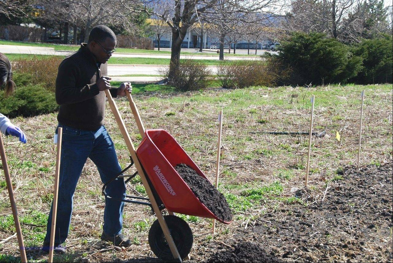 College of Pharmacy professor Amusa Adebayo dumps compost on a community garden plot he will tend this growing season.