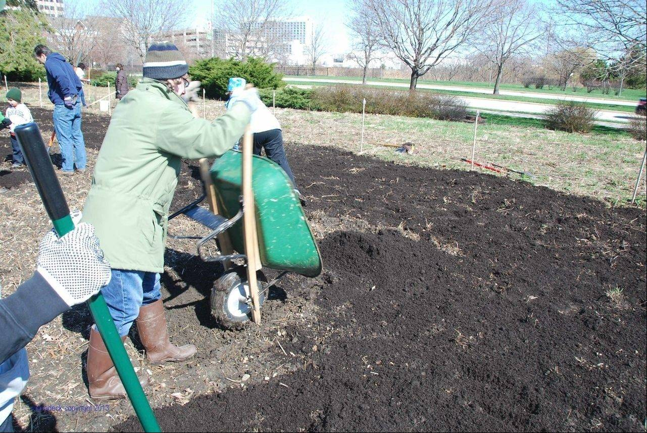 Gardeners tend to plots in a community garden at Roosevelt University's Schaumburg Campus.