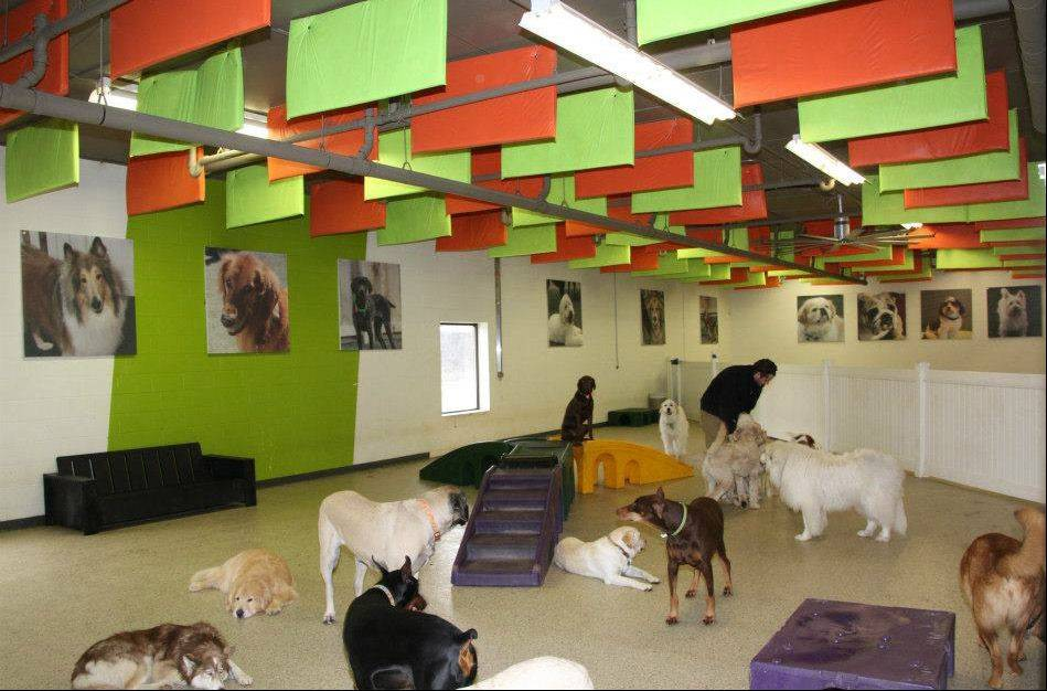 The owner of the ADOGO Pet Hotel in Minnetonka, Minn., wants to open a new location in Vernon Hills.