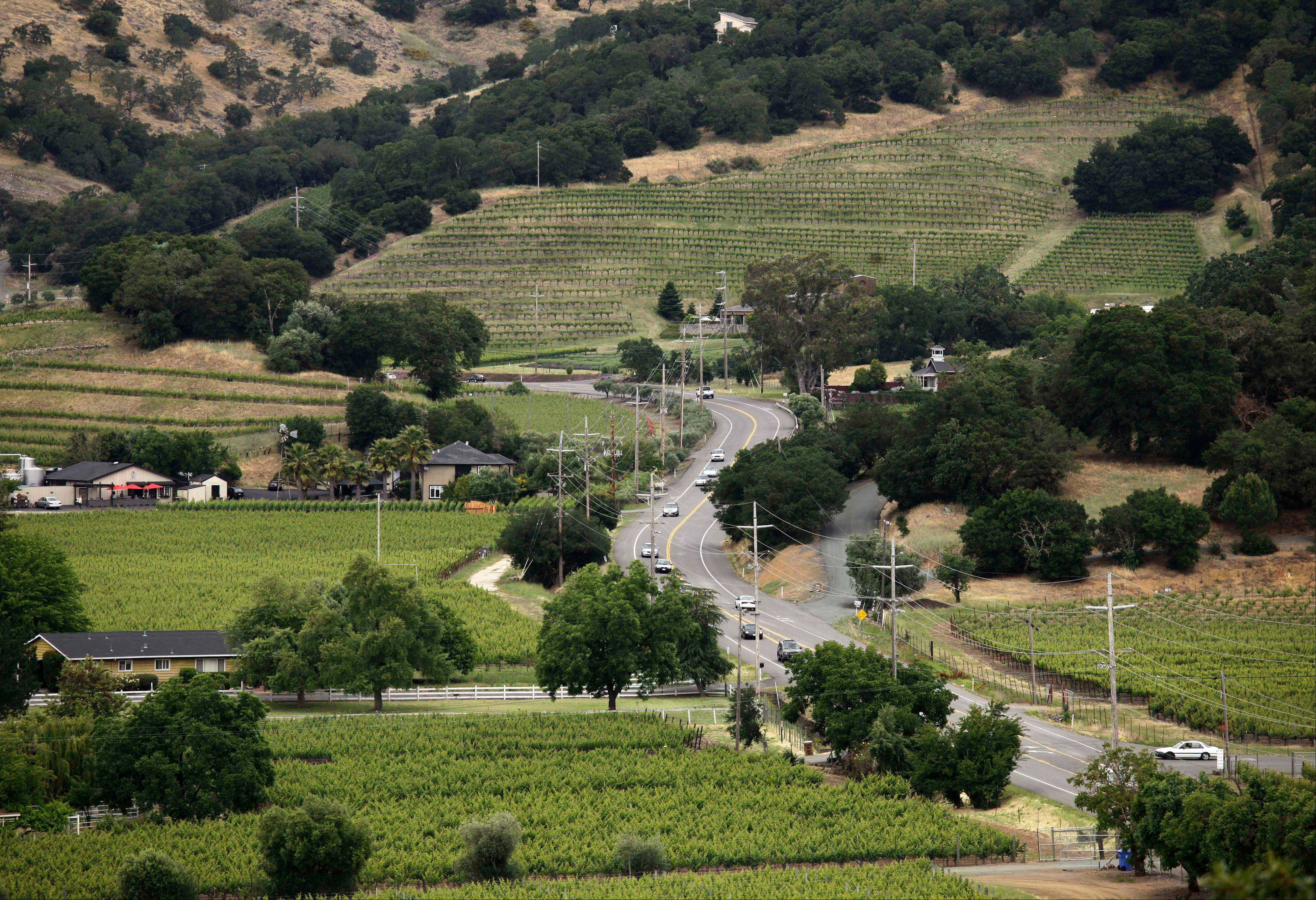 The Silverado Trail winds through the Stags Leap District from Silverado Vineyards in Napa, Calif. The trail more or less runs parallel to Highway 29, but is quieter, winding through green vistas of vineyards and rolling hills.