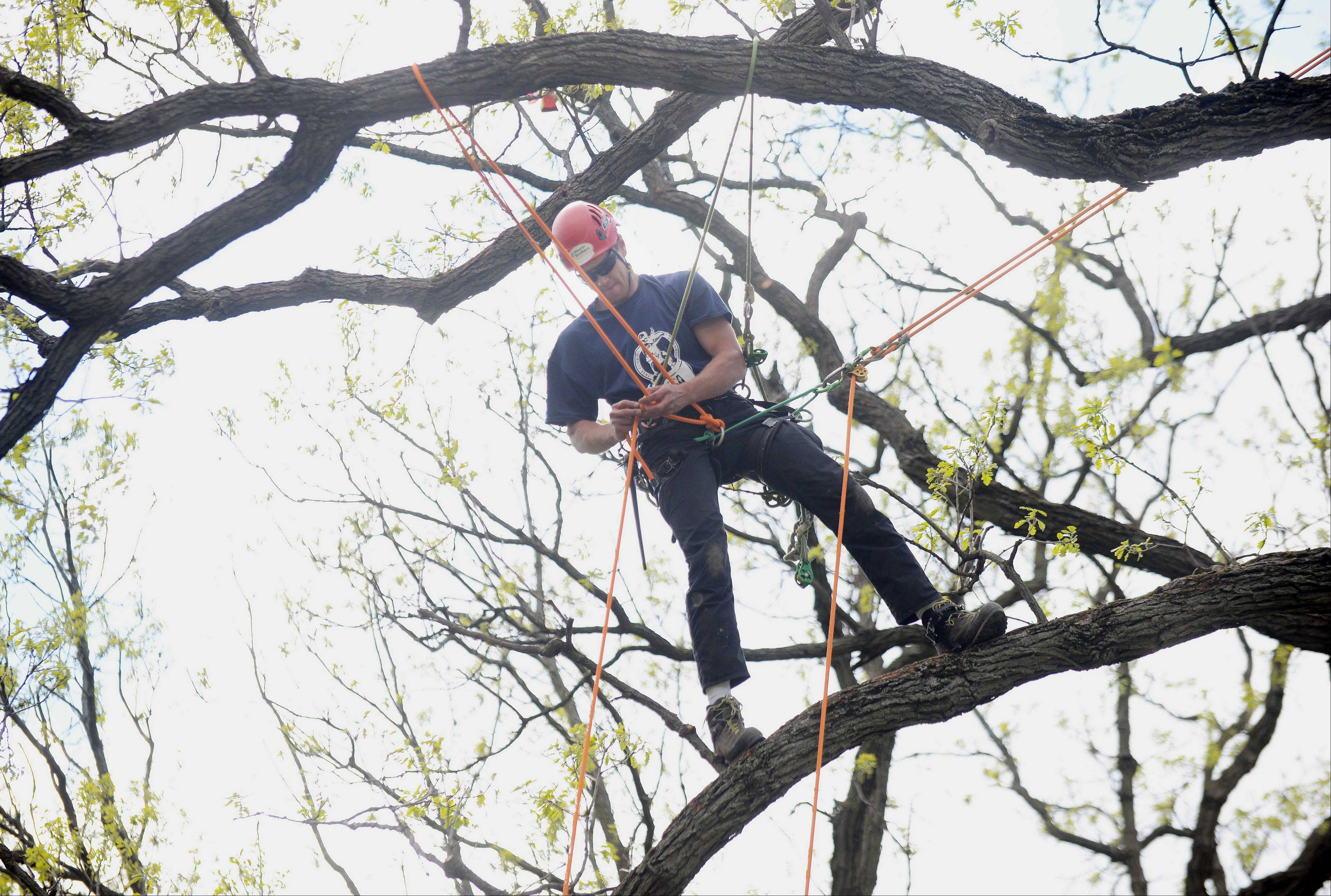 David Meurer of Belleville was one of 30 professional tree climbers who competed for the title of best climber in the Illinois Arborist Association annual tree climbing competition Saturday at Cantigny Gardens in Wheaton.