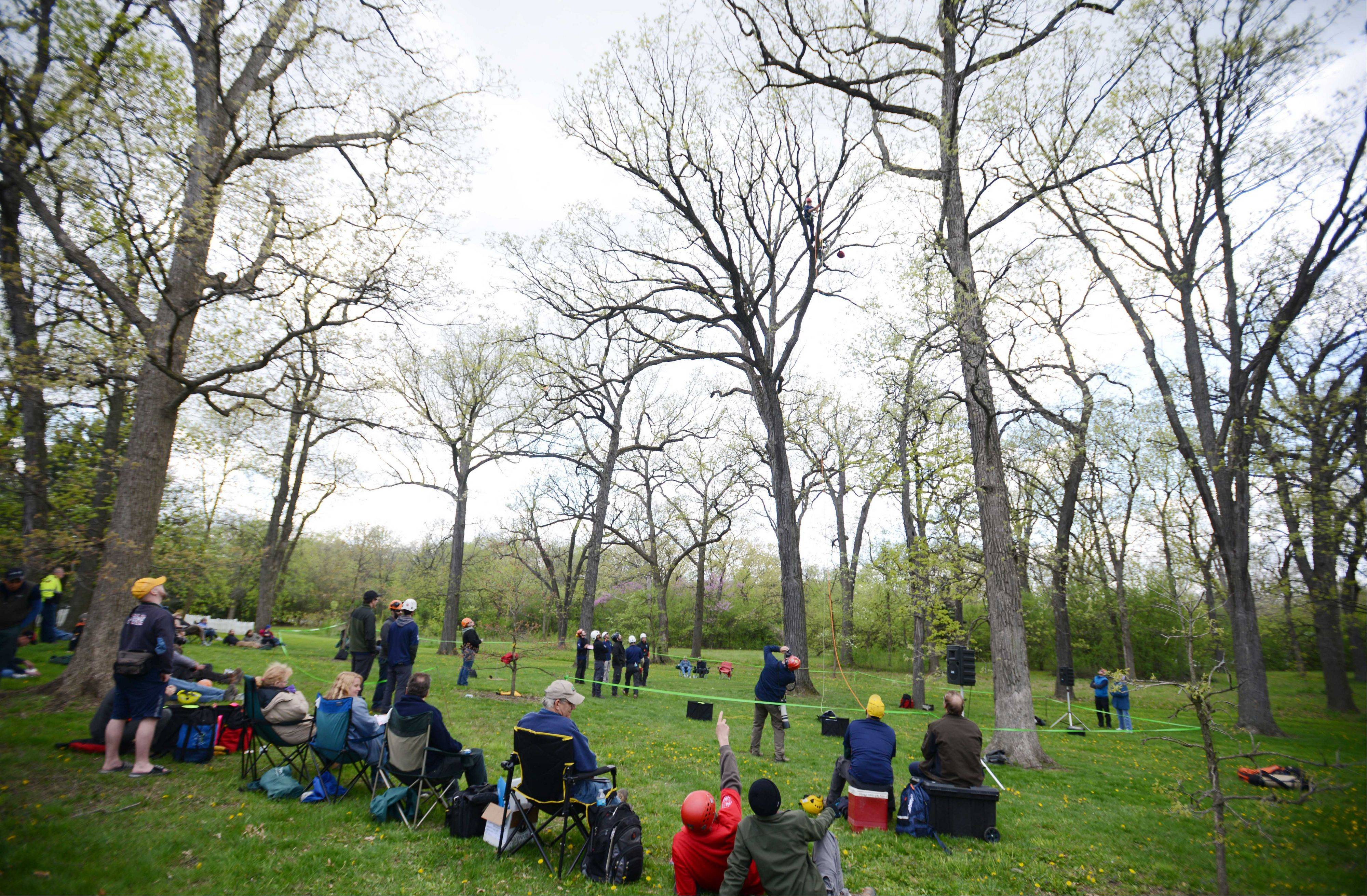 Thirty professional tree climbers competed for the title of best climber in the Illinois Arborist Association annual tree climbing competition Saturday at Cantigny Gardens in Wheaton. Climbers kept their eyes to the sky as they watch friends climb.