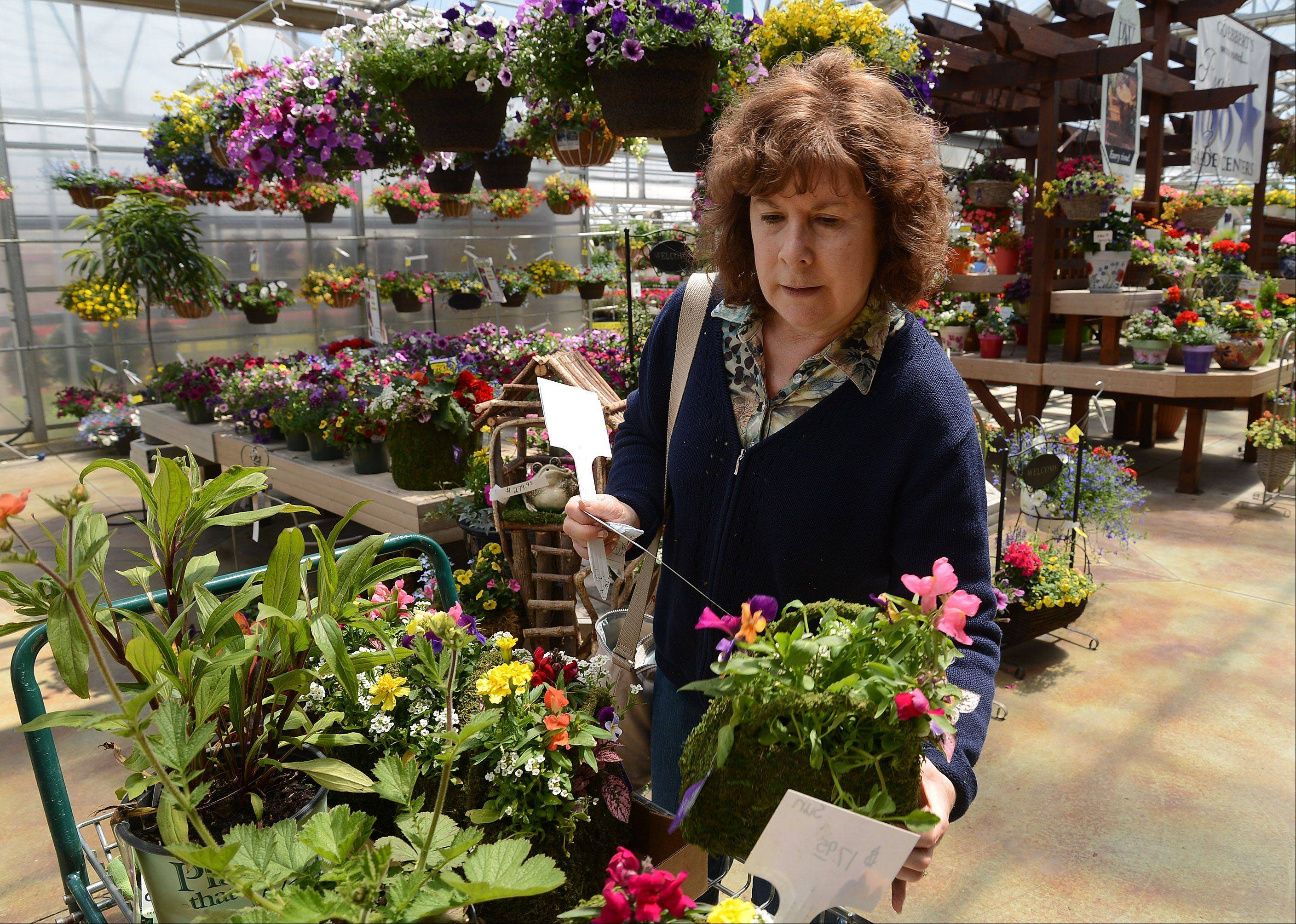 Delaying her planting until Monday's early frost gives way to a heat wave, Paula Ichert of Hoffman Estates picks out some flowers at Goebbert's Farm & Garden Center in South Barrington.