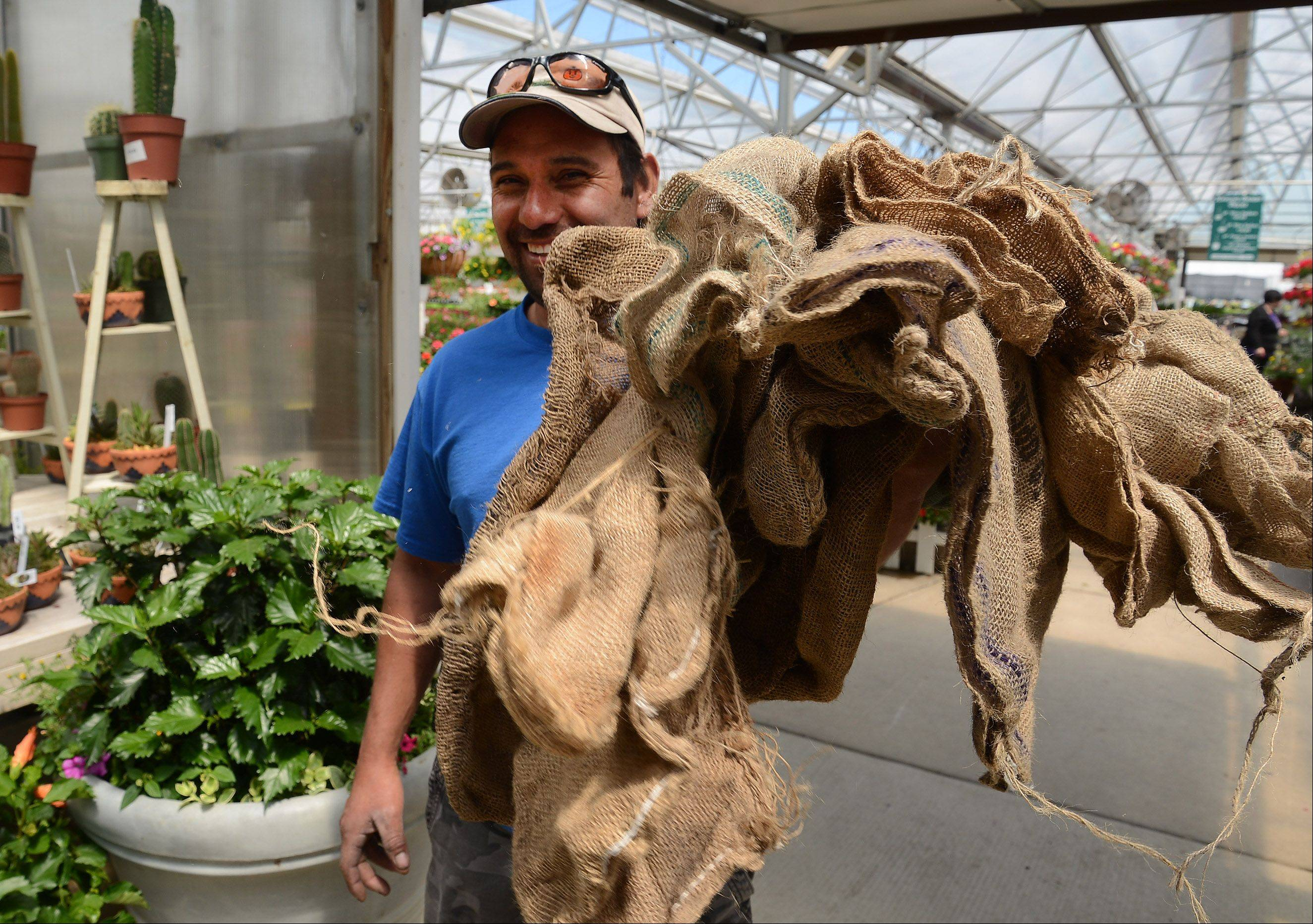 Antonio Rodriguez holds up the burlap sacks he and his crew used to cover the more delicate plants at Goebbert's Farm & Garden Center in South Barrington.