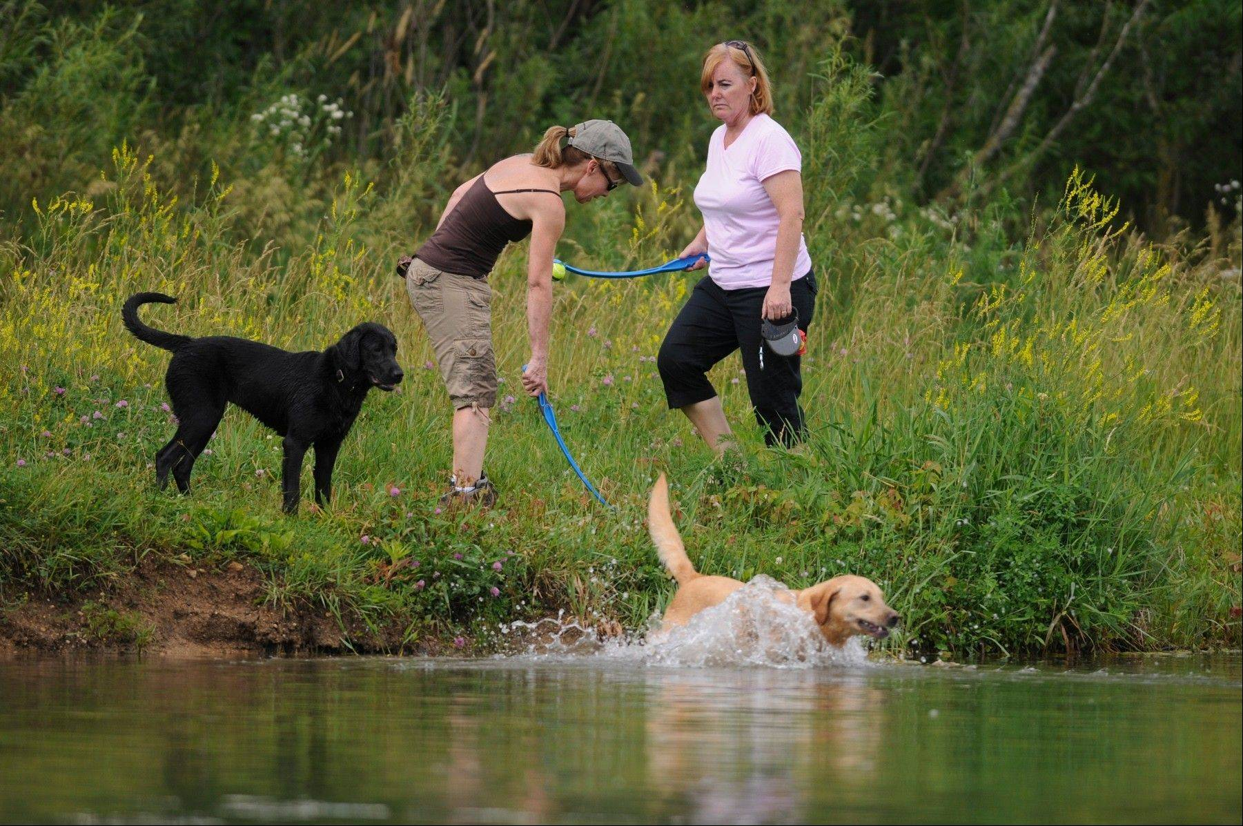 The dog days of summer � and fall, winter and spring � will be even more enjoyable at Jericho Lake Park with a host of new features and amenities to be implemented in coming months.