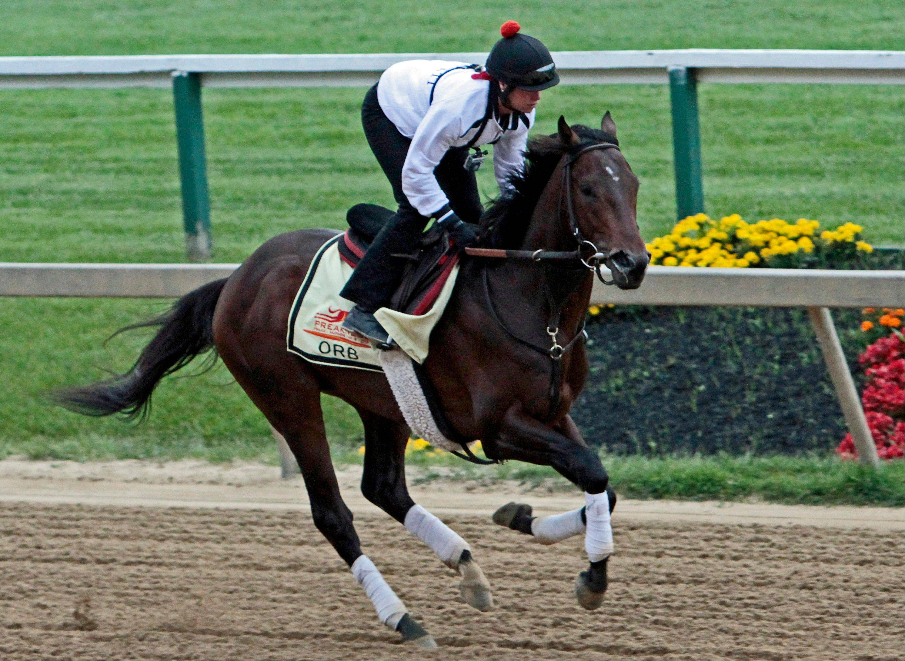 Exercise rider Jenn Patterson gallops Kentucky Derby winner and Preakness Stakes favorite Orb at Pimlico Race Course in Baltimore, Thursday, May 16, 2013.