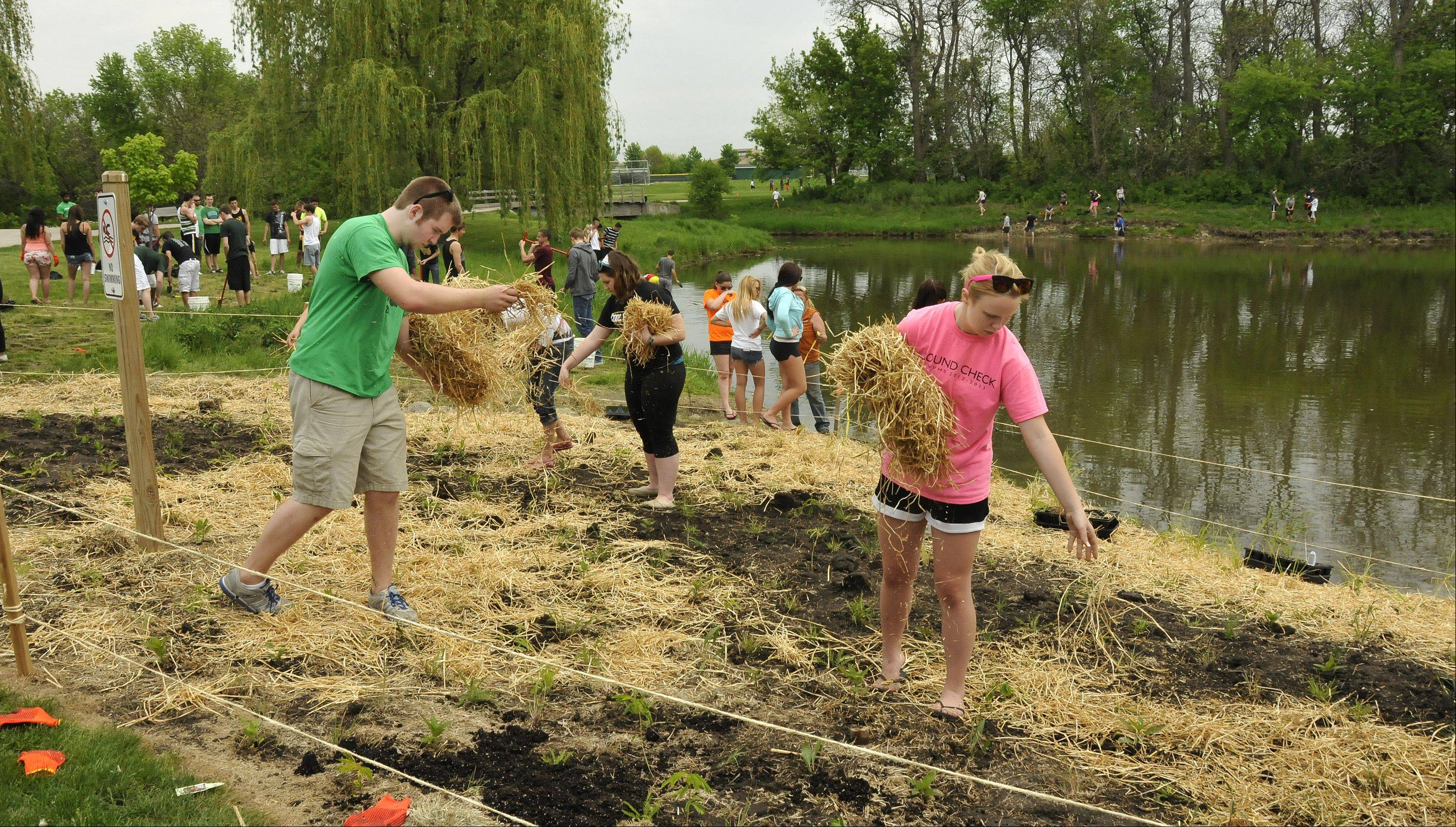 Kyle Horn, left, and Madeline Zehnal scatter hay Friday to protect newly planted prairie plants from weeds around Waubonsie Lake in Aurora. Advanced Placement science students from Waubonsie Valley High School spent two days working to restore prairie around the lake.