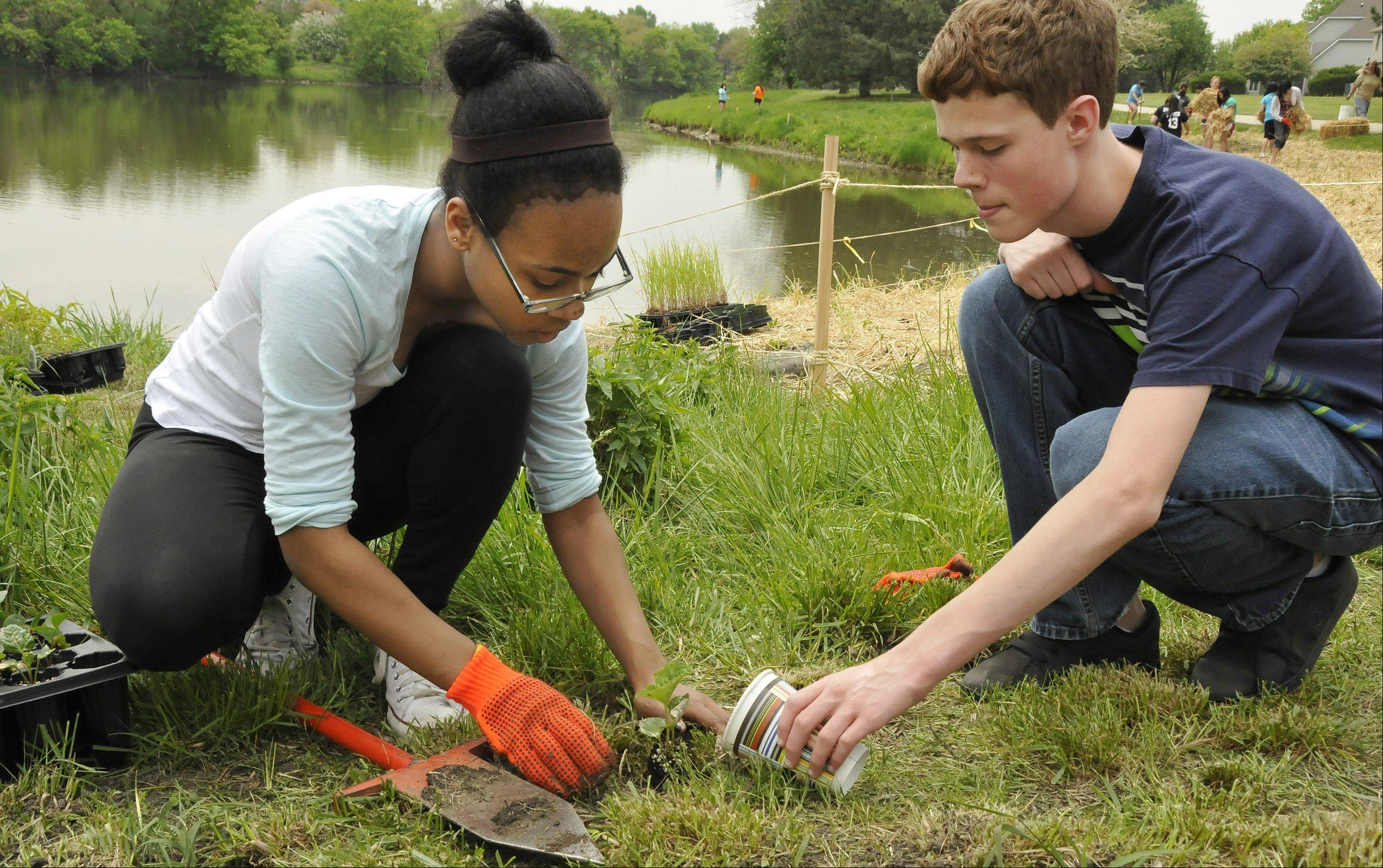 Bria Allen, left, and Danny Sori plant and water a native Cup Plant at Waubonsie Lake. When the plant gets bigger, its leaves will collect rainwater that birds will be able to drink.