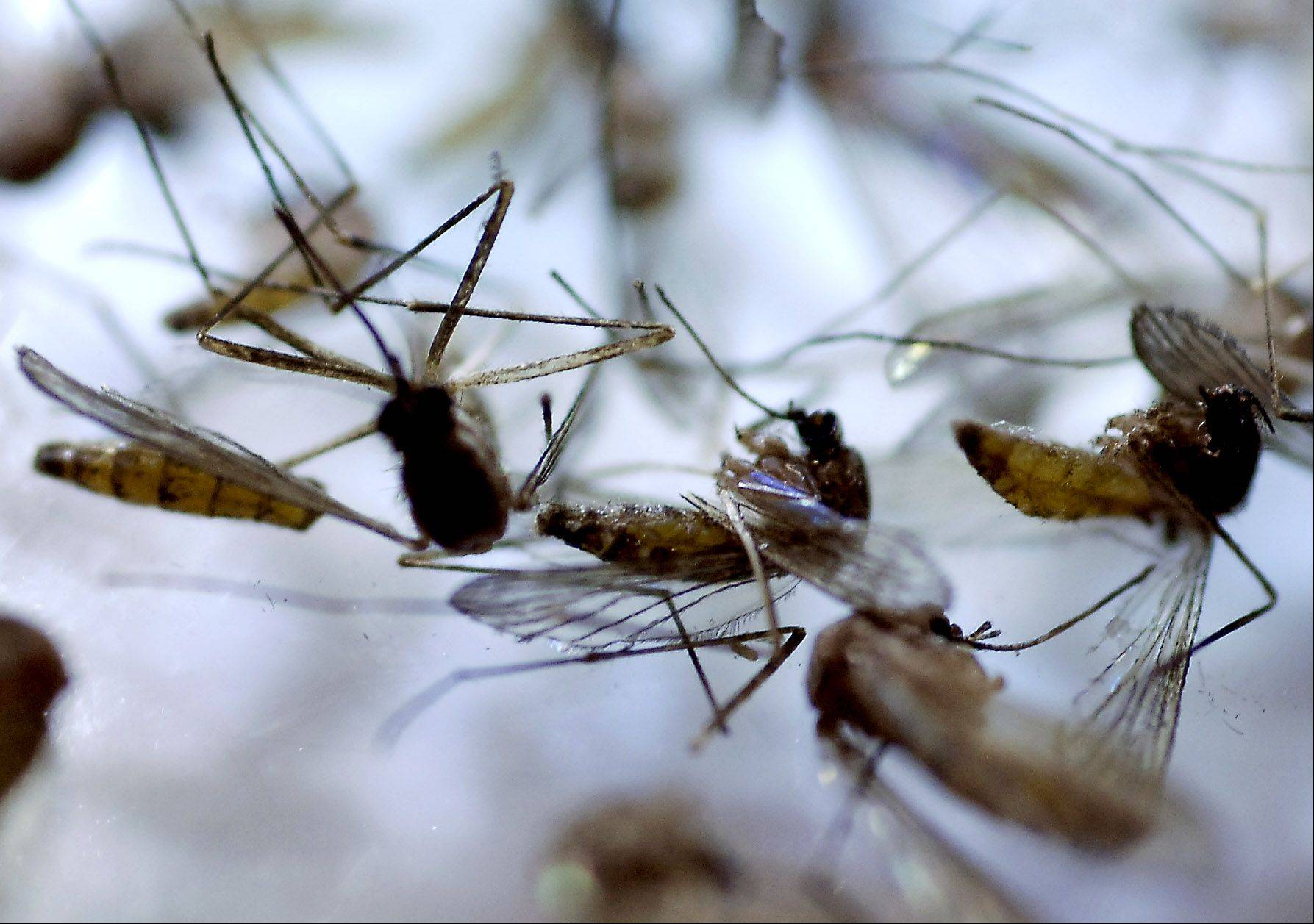 A task force is working to develop new strategies to control the mosquito population in DuPage County. One suggestion could be to have townships oversee the effort.
