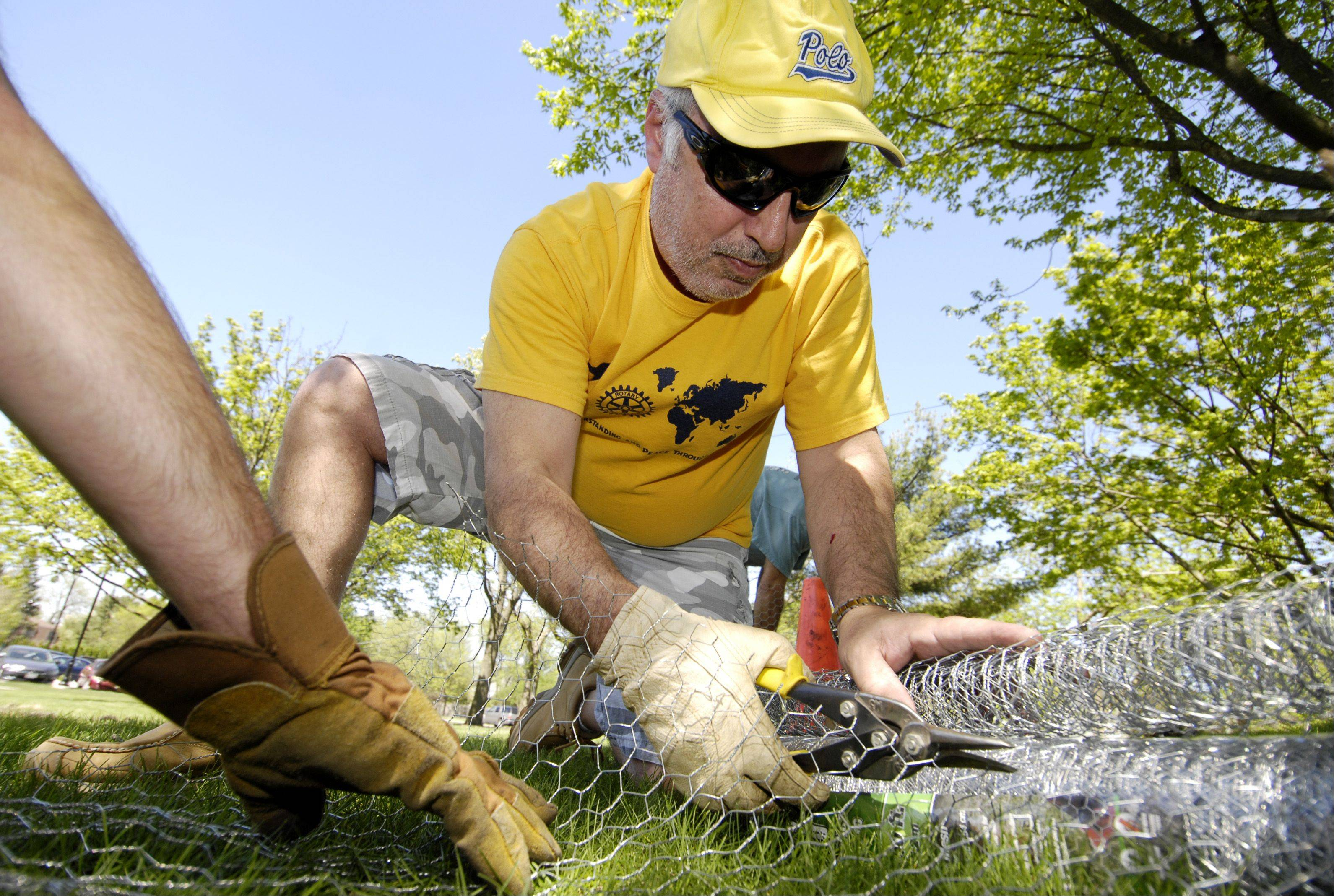 Joe Cuttone, President of the Wheaton Rotary Club, cuts wire mesh for cages to be placed around the nearly 200 oak saplings at Seven Gables Park in Wheaton.