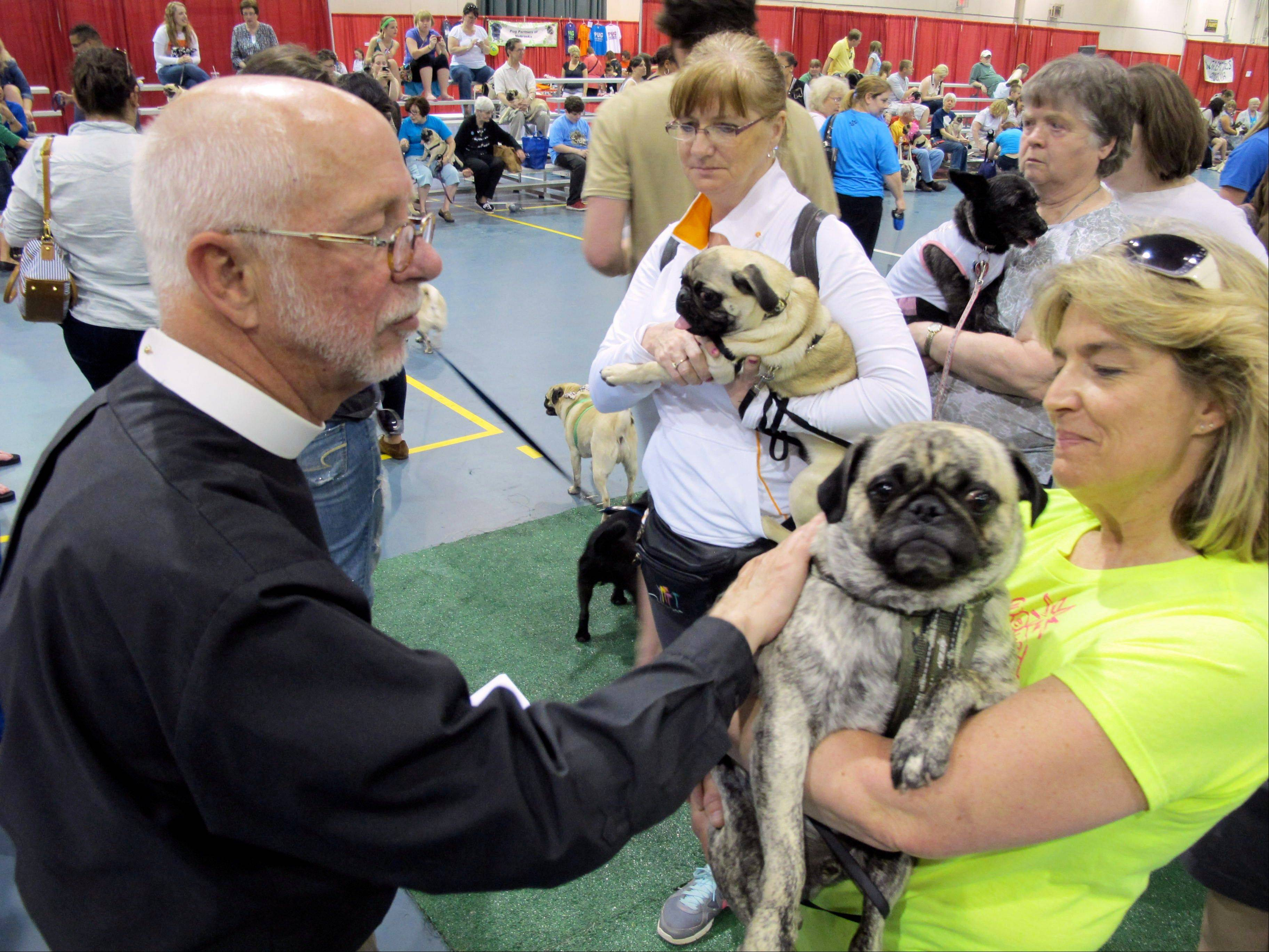 The Rev. John Allen blesses Chip, who is being held by Lisa Erdmann, at Milwaukee Pug Fest in Franklin, Wis.