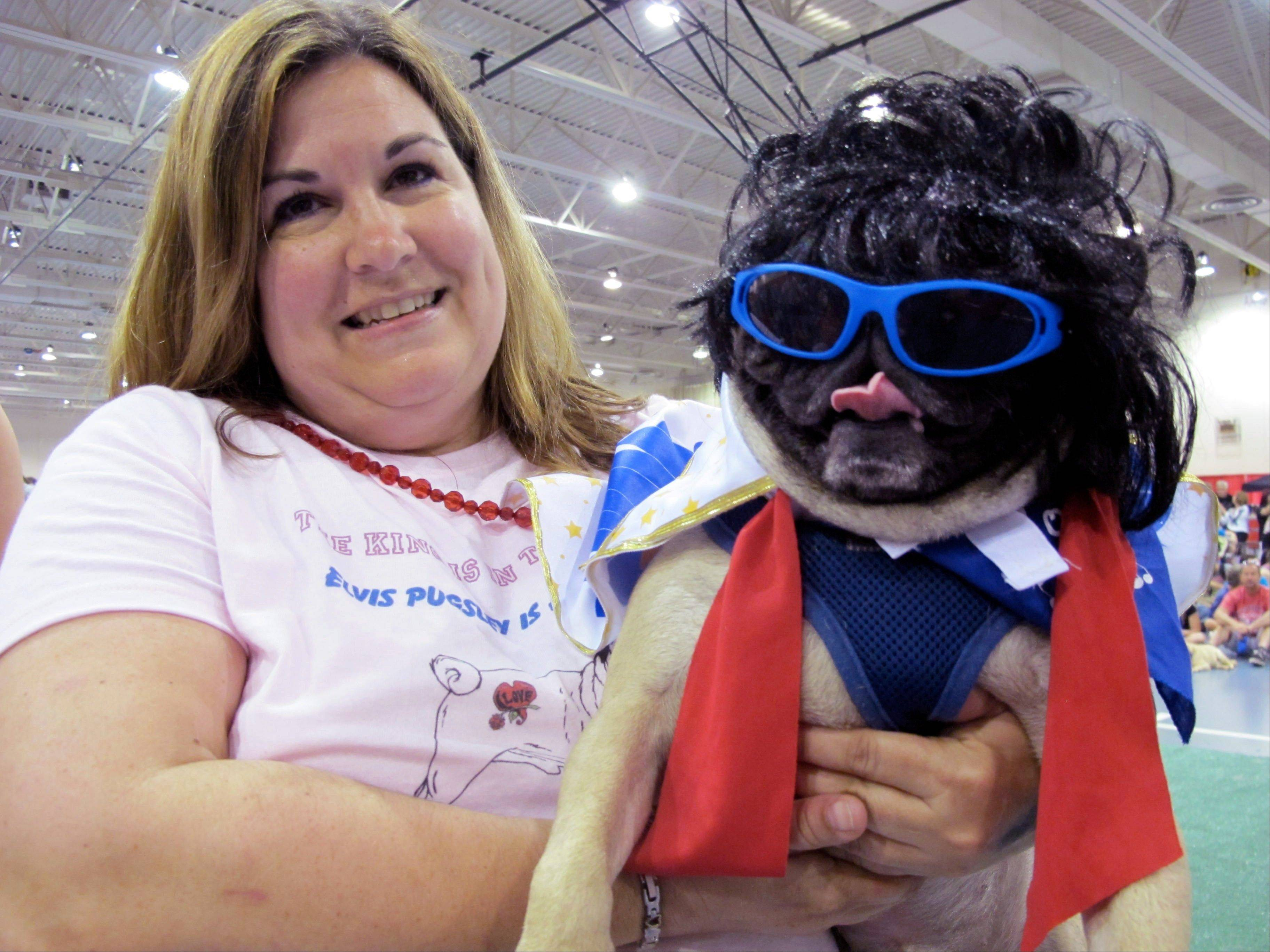 Diane Schafroth holds Elvis Pugsley at Milwaukee Pug Fest in Franklin, Wis.