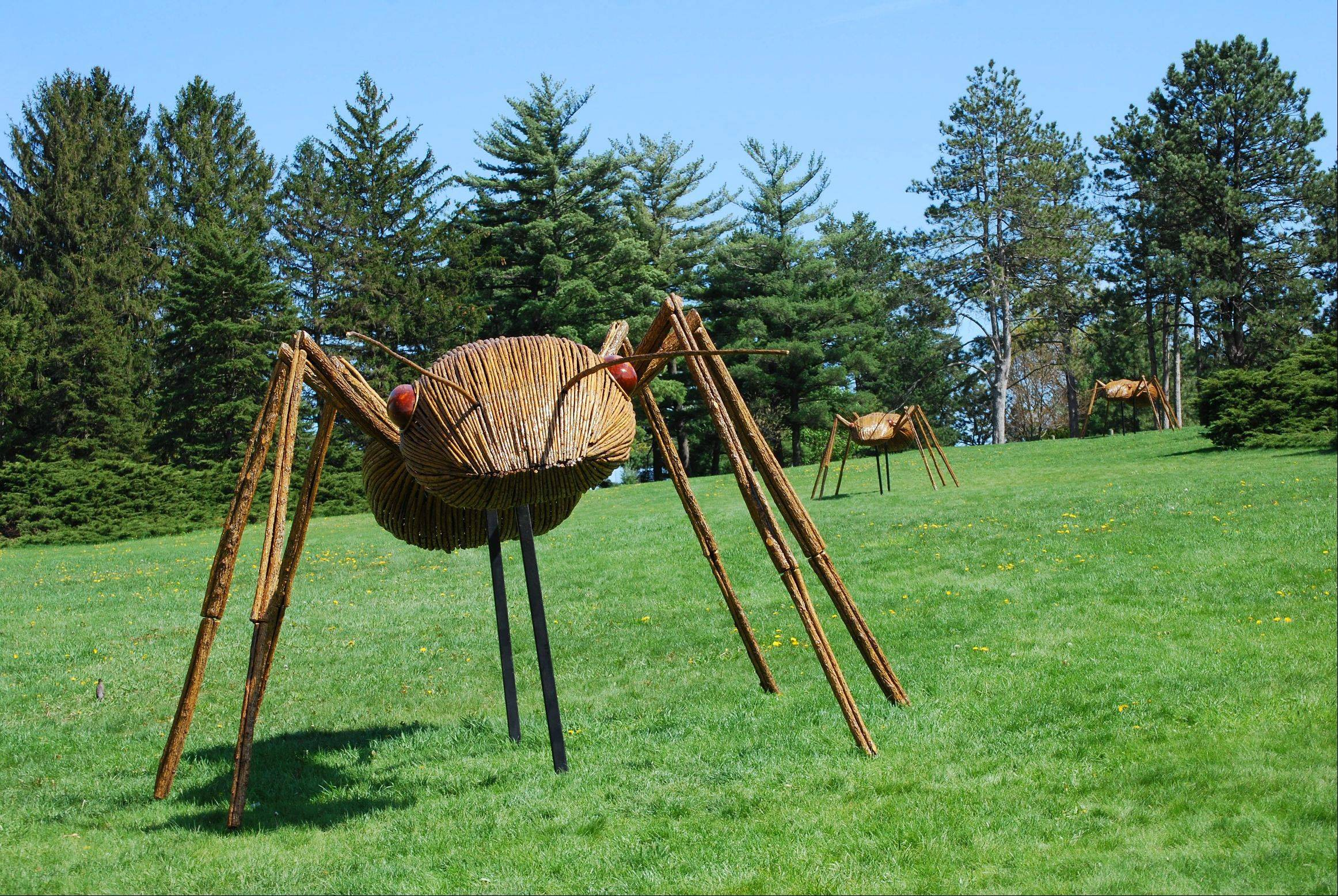 Shirley Wilson of Glen Ellyn took this picture of giant ants at the Morton Arboretum in Lisle. The ants are part of a sculpture exhibit at the outdoor museum.