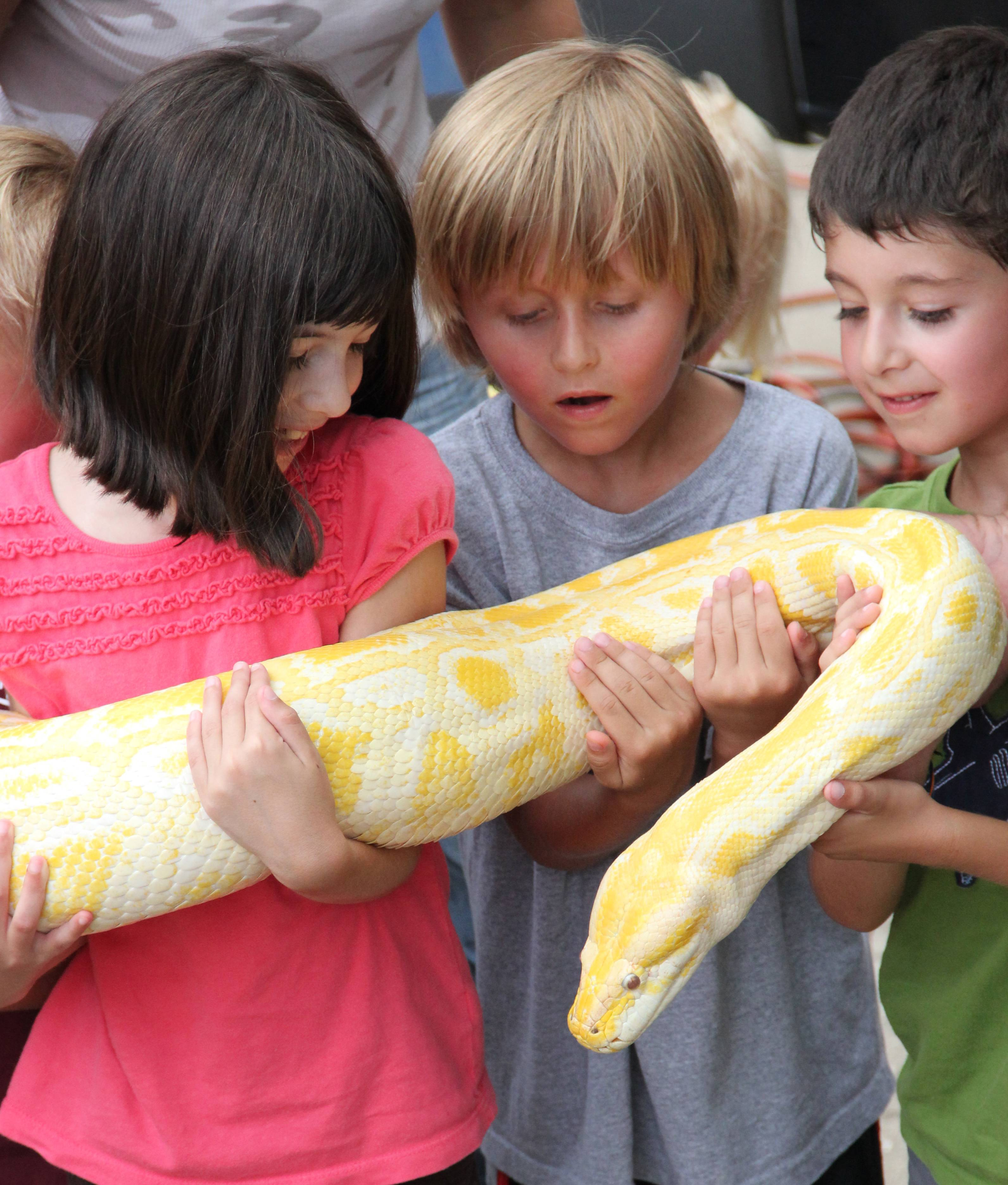 Children hold a snake during last year's reptile show at Noonie Times.