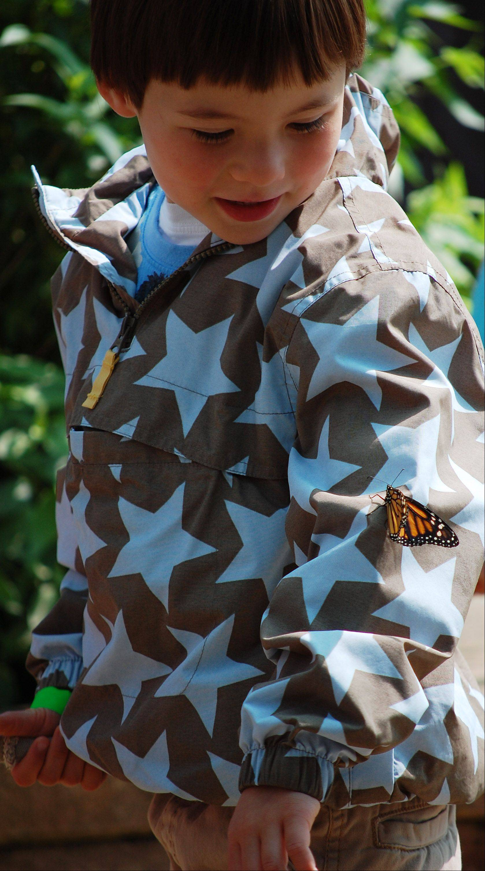 Jake Turoff, 3, of Geneva, enjoys the 10th anniversary of the Butterfly House at Peck Farm Park. It opened Friday with the release of 400 butterflies.