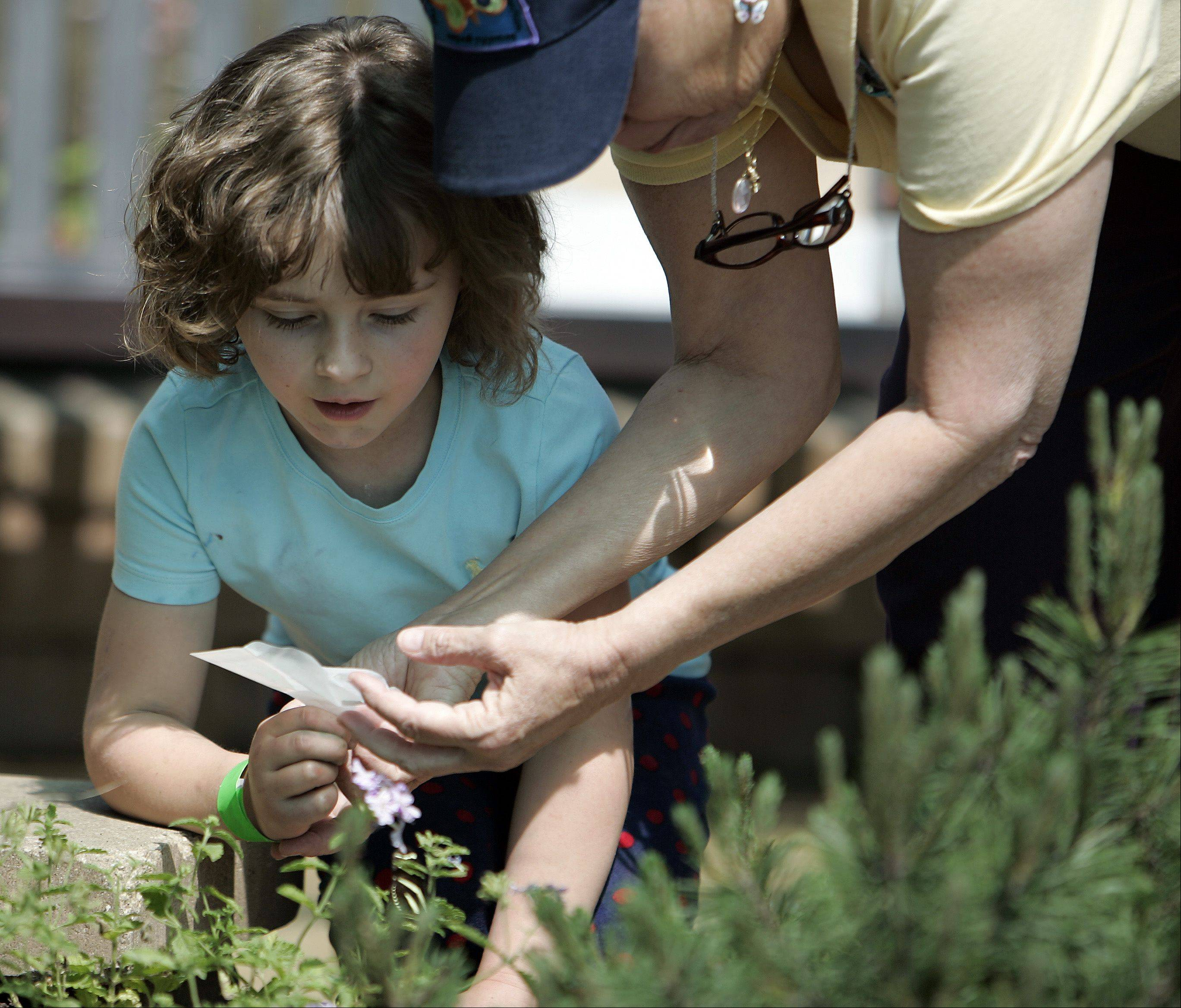 Six-year-old Olivia Gebhardt of Batavia gets a helping hand from her nanny, Susan Jensen, while releasing a butterfly during the 10th anniversary of the opening of the Butterfly House at Peck Farm Park in Geneva Friday. Jensen is a volunteer at Peck Farm Park.