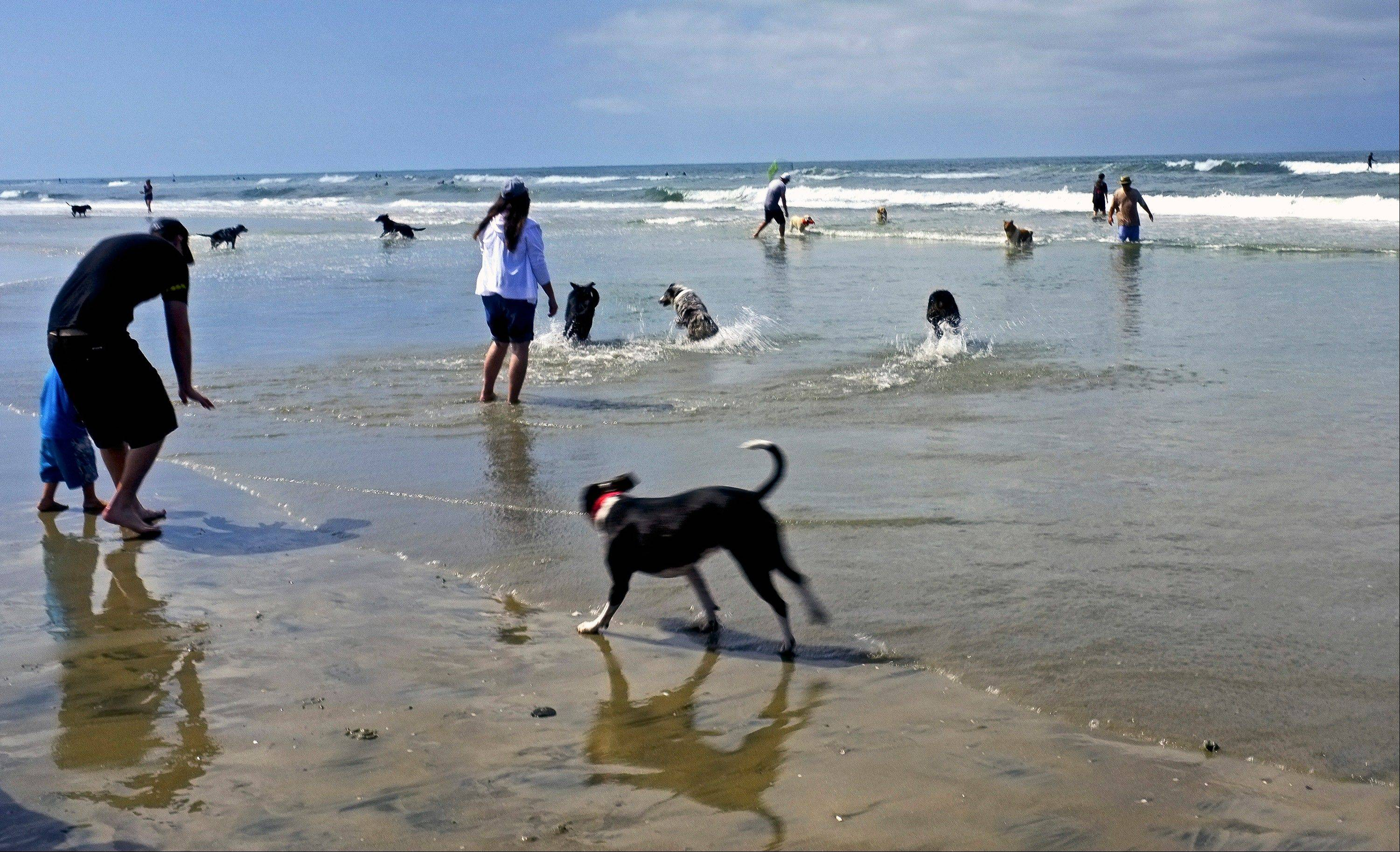 Dogs and their owners play in the surf at the Huntington Dog Beach in Huntington Beach, Calif. Huntington, also known as Surf City USA, is one of the best-known dog surfing beaches in the world.