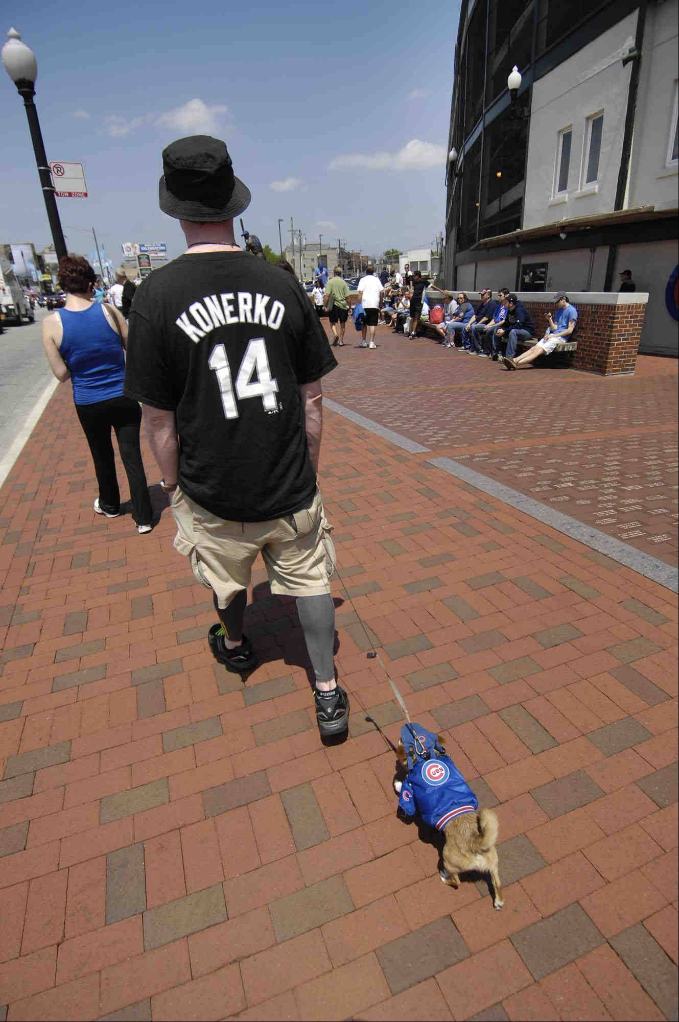 Larry Gold wears his White Sox jersey as his roommate Erwin, an eight-year-old chihuahua wears his Cubs jersey and hat as they walk around Wrigley Field before the game. Larry said he lives on the south side of his Chicago apartment while Erwin lives on the north side.