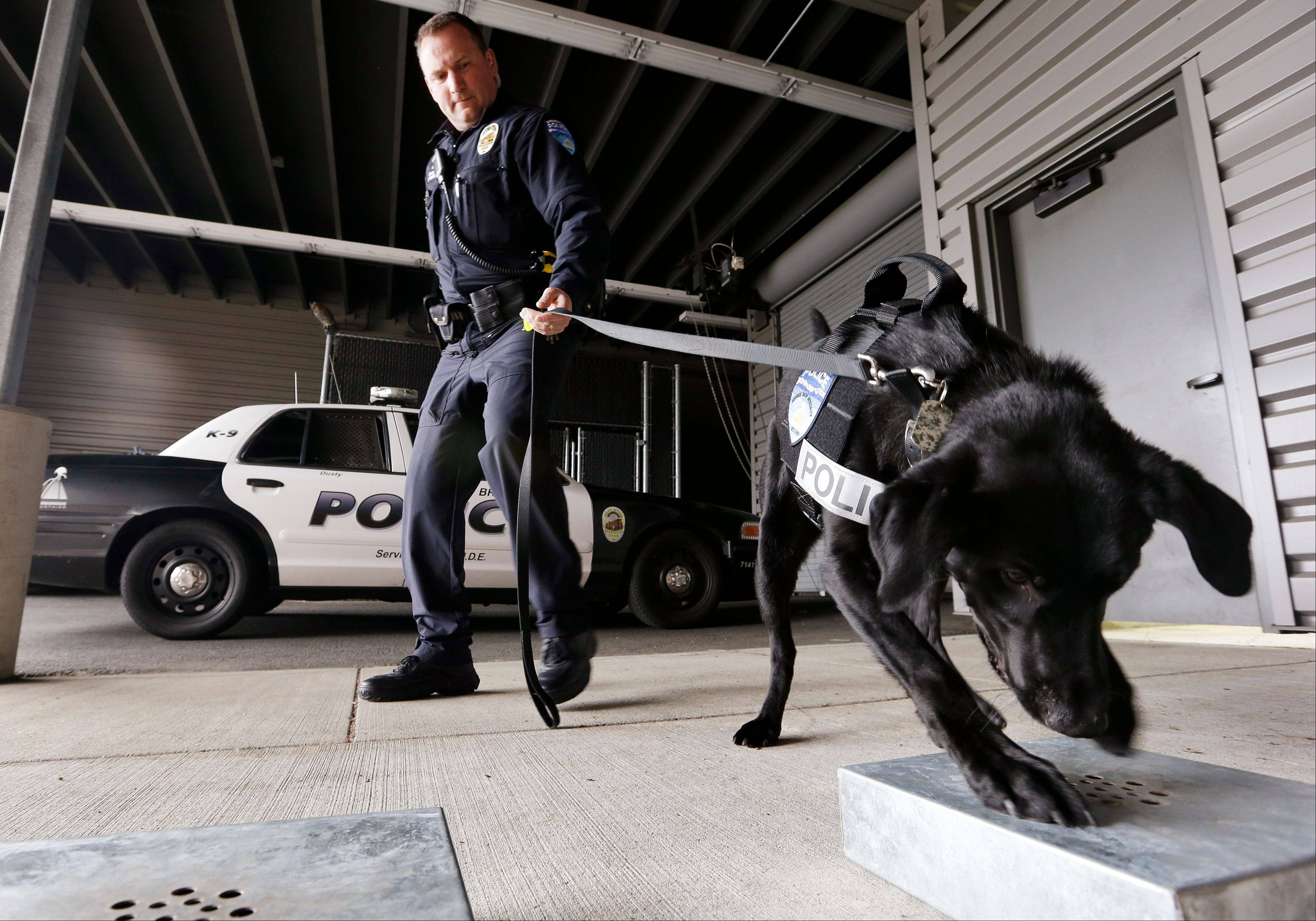 Associated Press Drug-sniffing police dog Dusty is watched by handler Officer Duke Roessel Thursday as the K-9 begins to dig at a box after successfully locating a stash of heroin during a training session at the police station in Bremerton, Wash.
