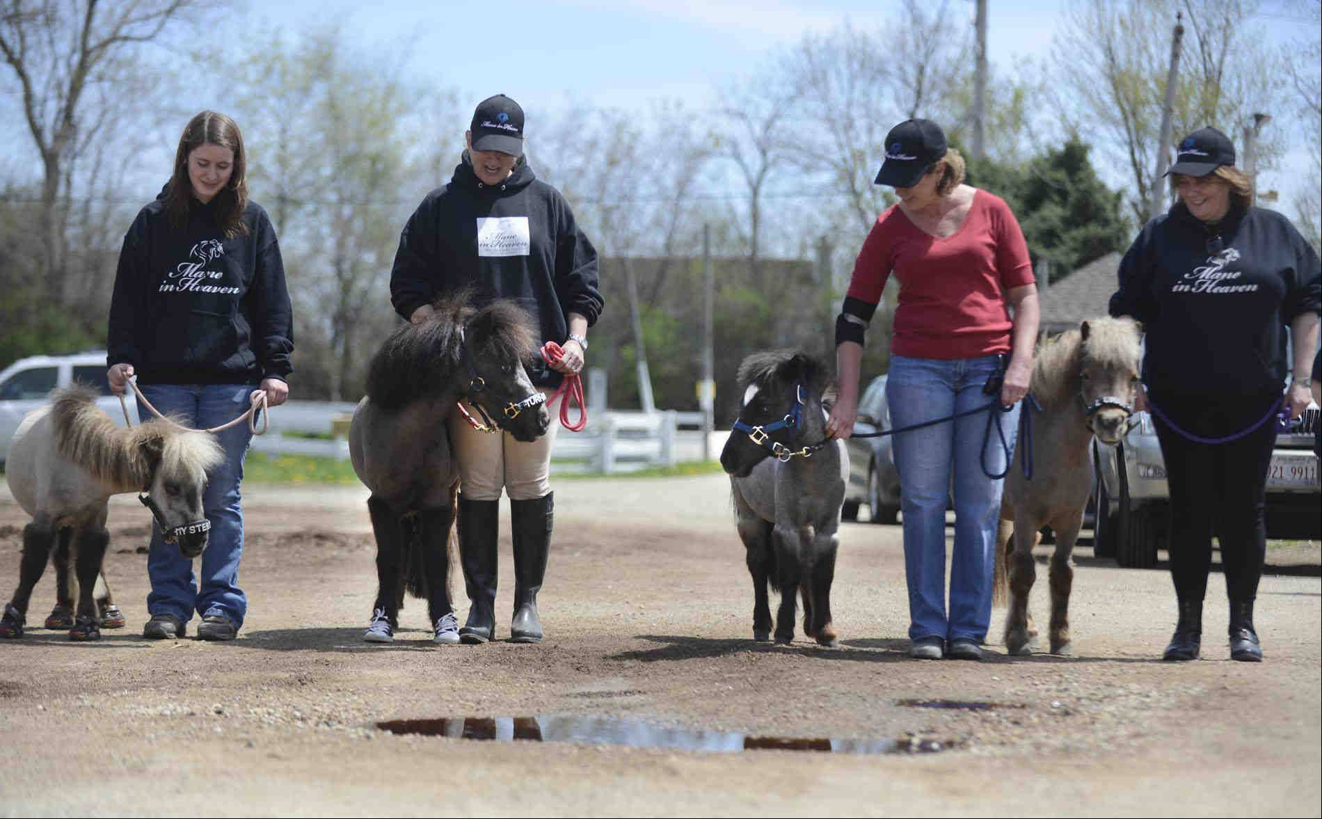 Moving Picture: Miniature horses serve as therapy animals