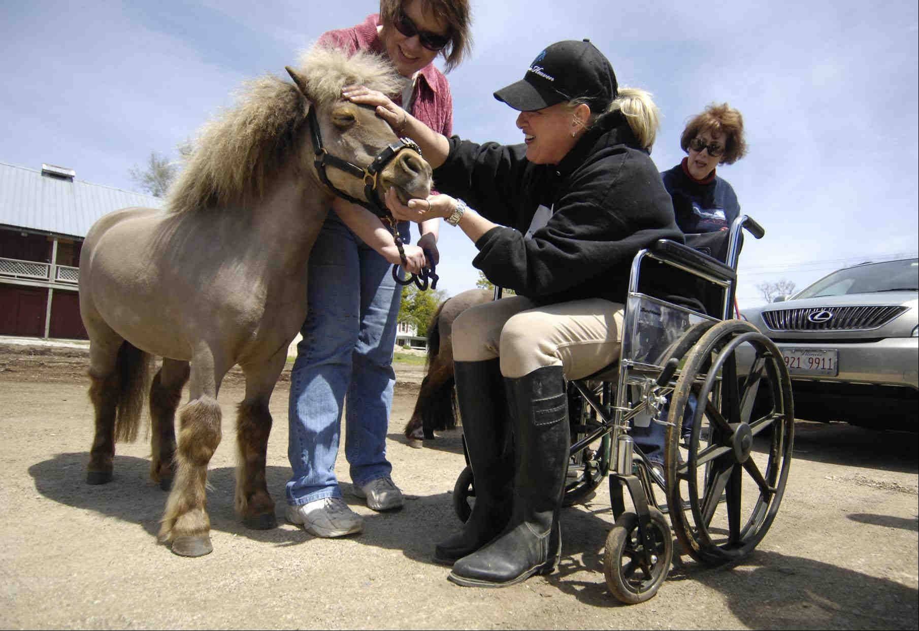 Jodie Diegel approaches Lunar, the oldest mare of the group, in a wheelchair to desensitize the horse. Its natural reaction would be to bolt, so desensitizing is important for the safety of the animals, handlers and the people they are visiting. Lunar is one of four miniature horses at Mane In Heaven pet therapy organization.
