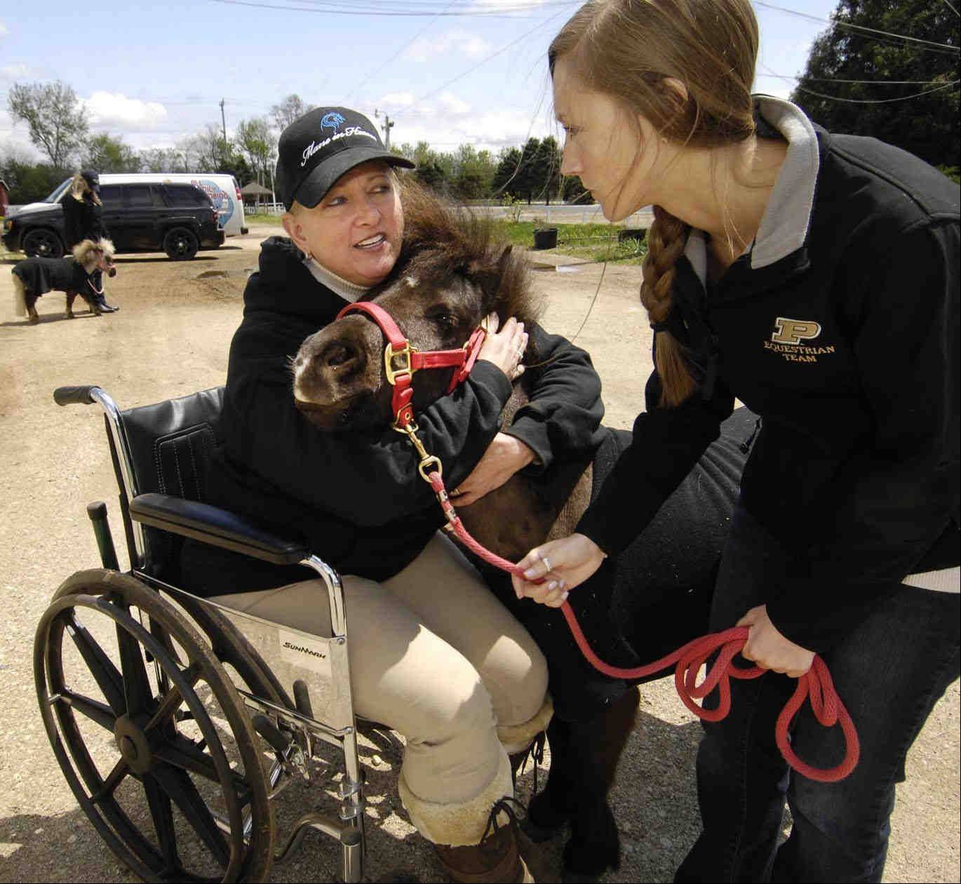 Jodie Diegel trains Lara Budmats, treasurer for Mane In Heaven, and Turnabout, a 2-year-old male miniature horse to be calm around a wheelchair. The handlers and horses must work together for the safety of all during visits.