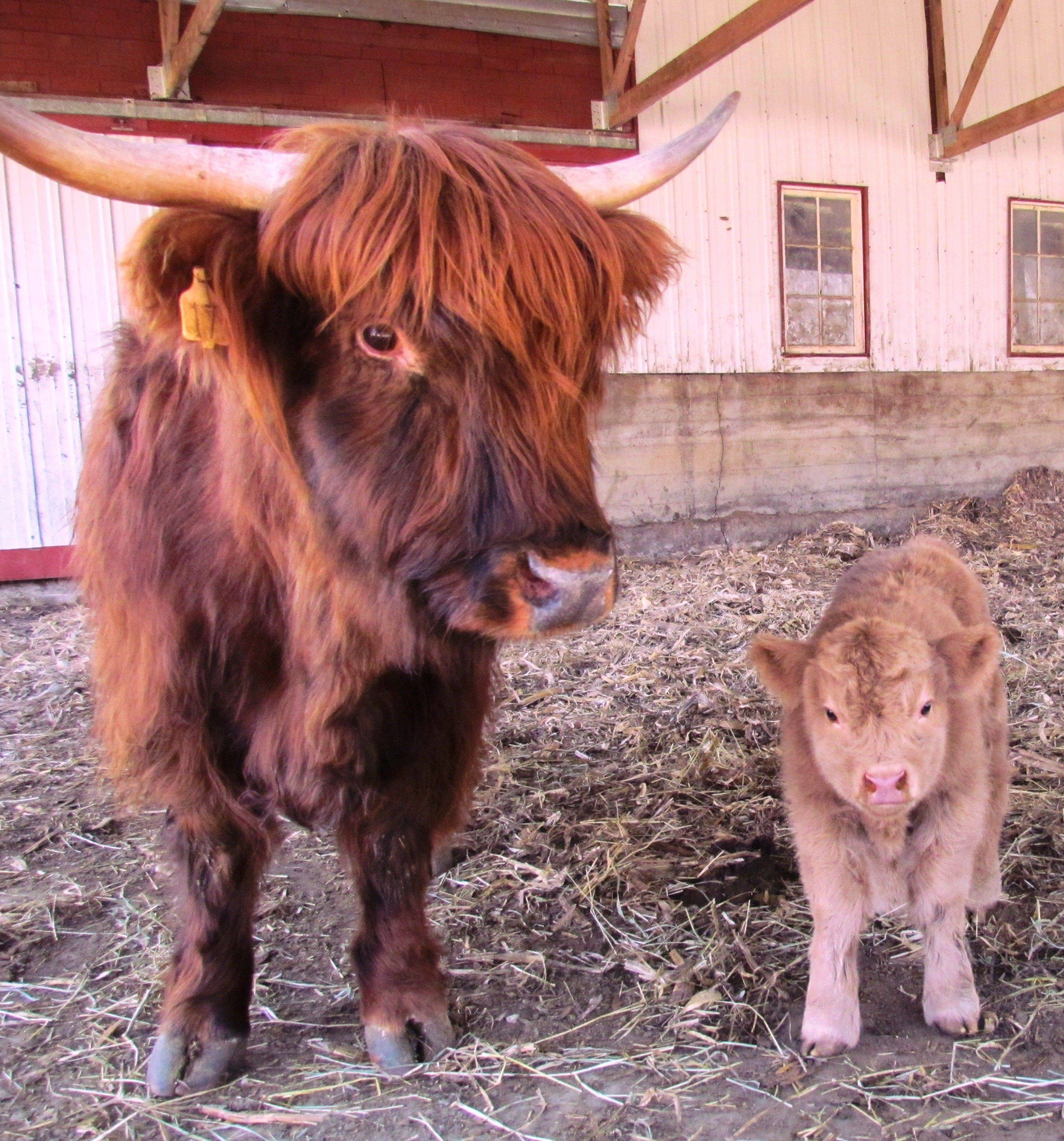 At Brambleberry Farms, you can get up close with the farm animals, evening feeding them if you like.