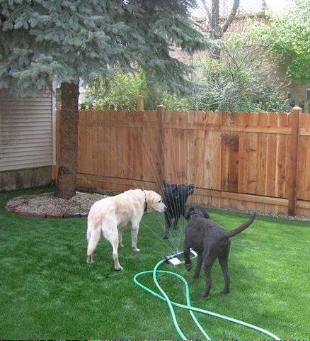 FieldTurf, an artificial turf gaining ground in home use, is particularly good for pet areas.