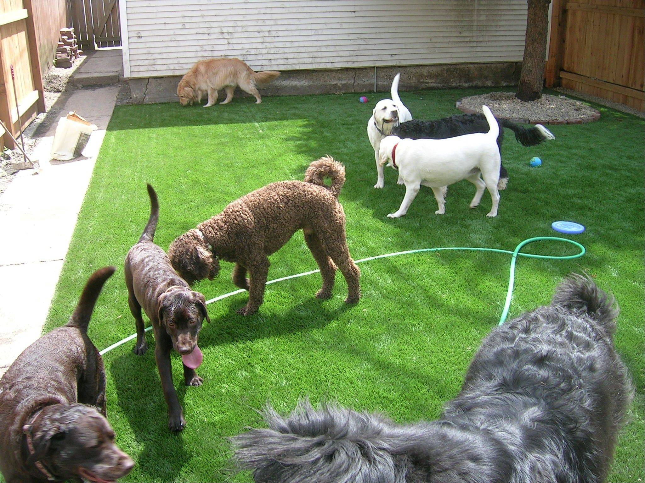 FieldTurf, an artificial turf gaining ground in home use, is particularly good for pet areas and is becoming popular at kennels and pet day-care centers.