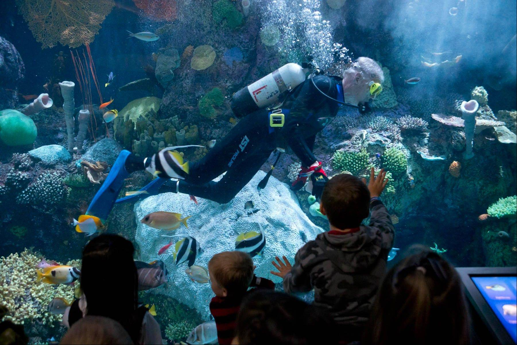 Lou Nesslar dives at the Wild Reef exhibit, where he feeds the fish, checks for diseases, and does repair work and cleaning in the tanks.