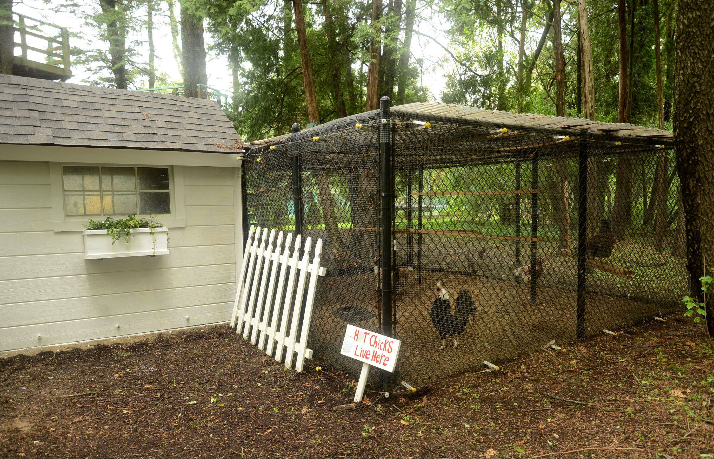 The chickens stay in their coop year-round with only a little heat in the winter.