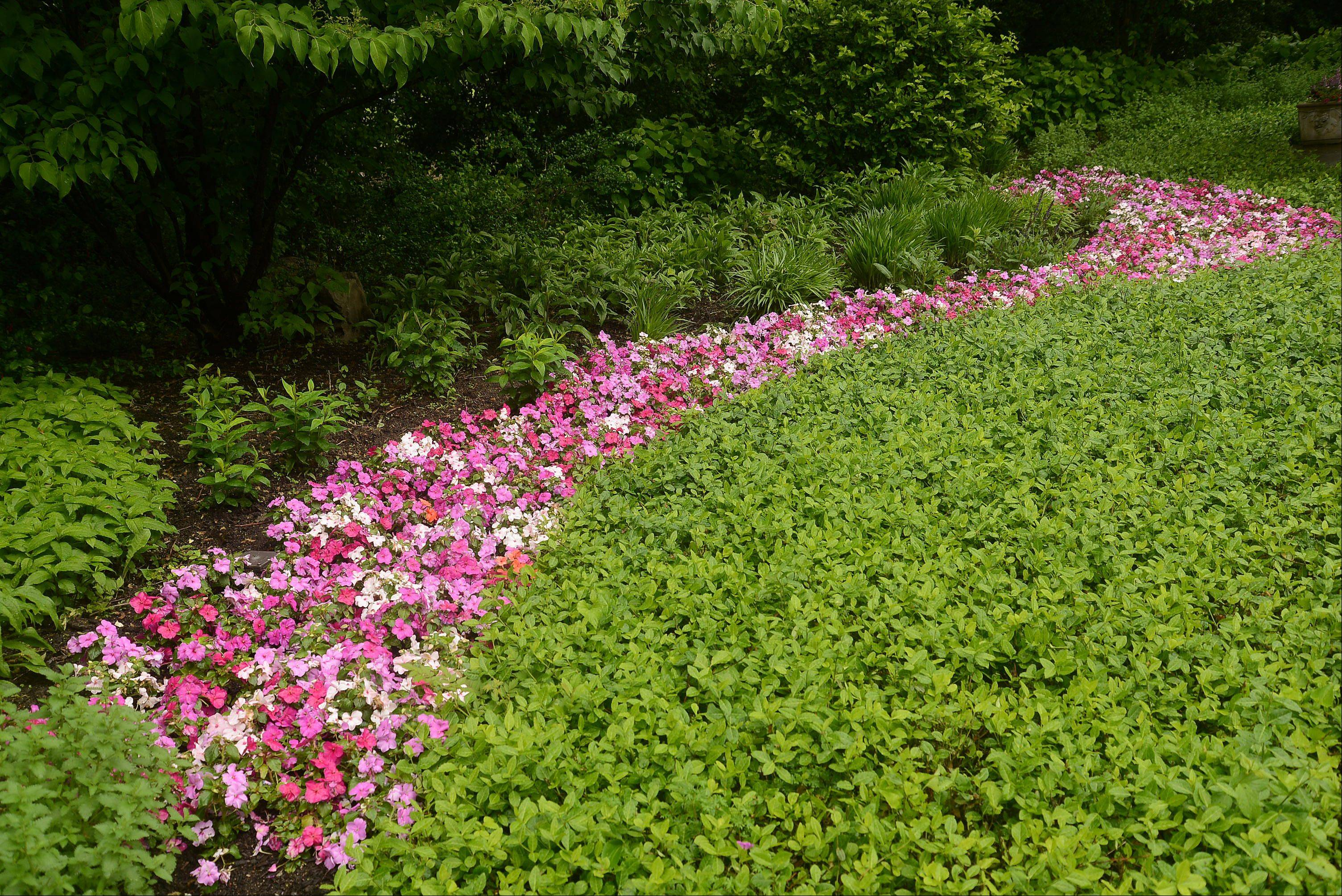 Impatiens provide color in a shaded area of the Barrington Hills estate.